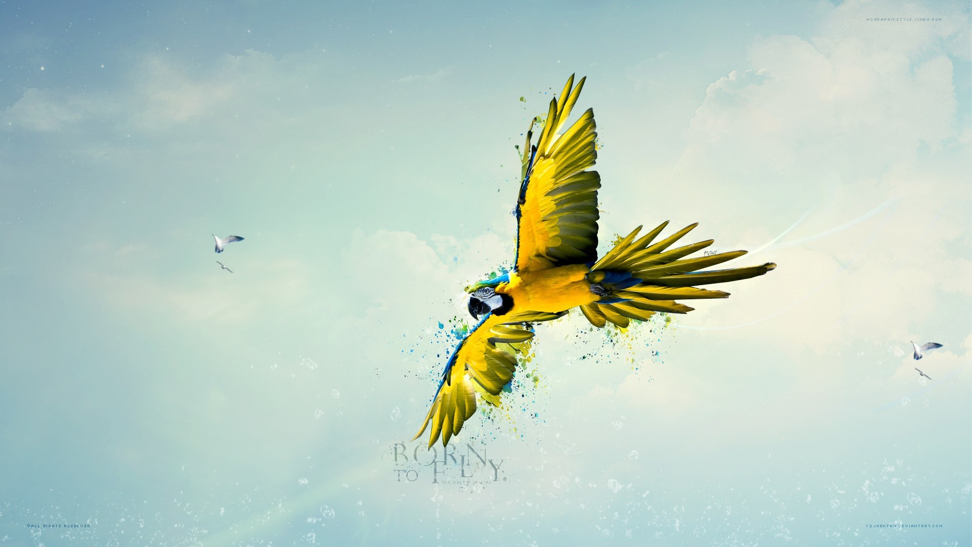 Birds text fly Parrots HD Wallpaper