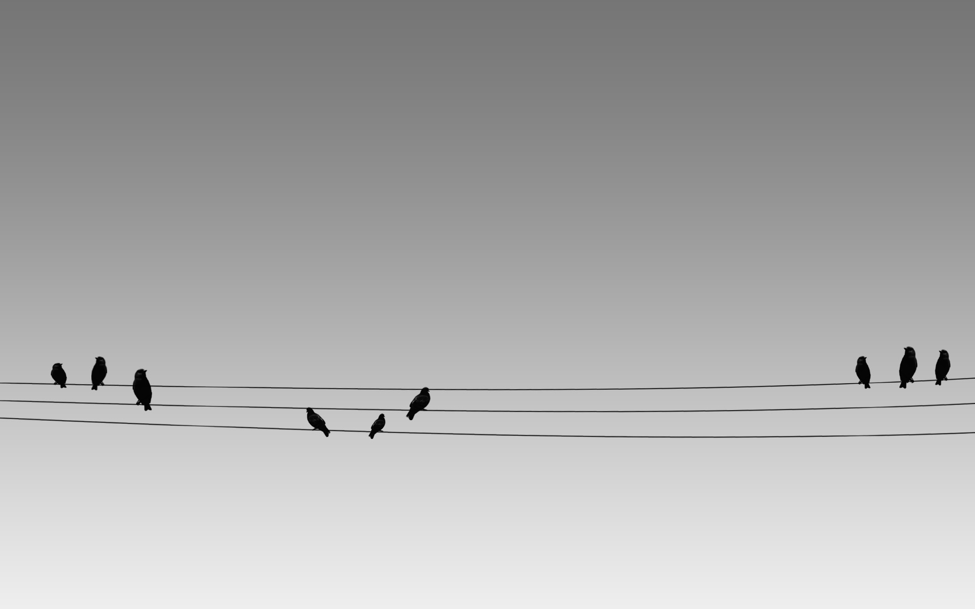 Birds wires minimalistic HD Wallpaper