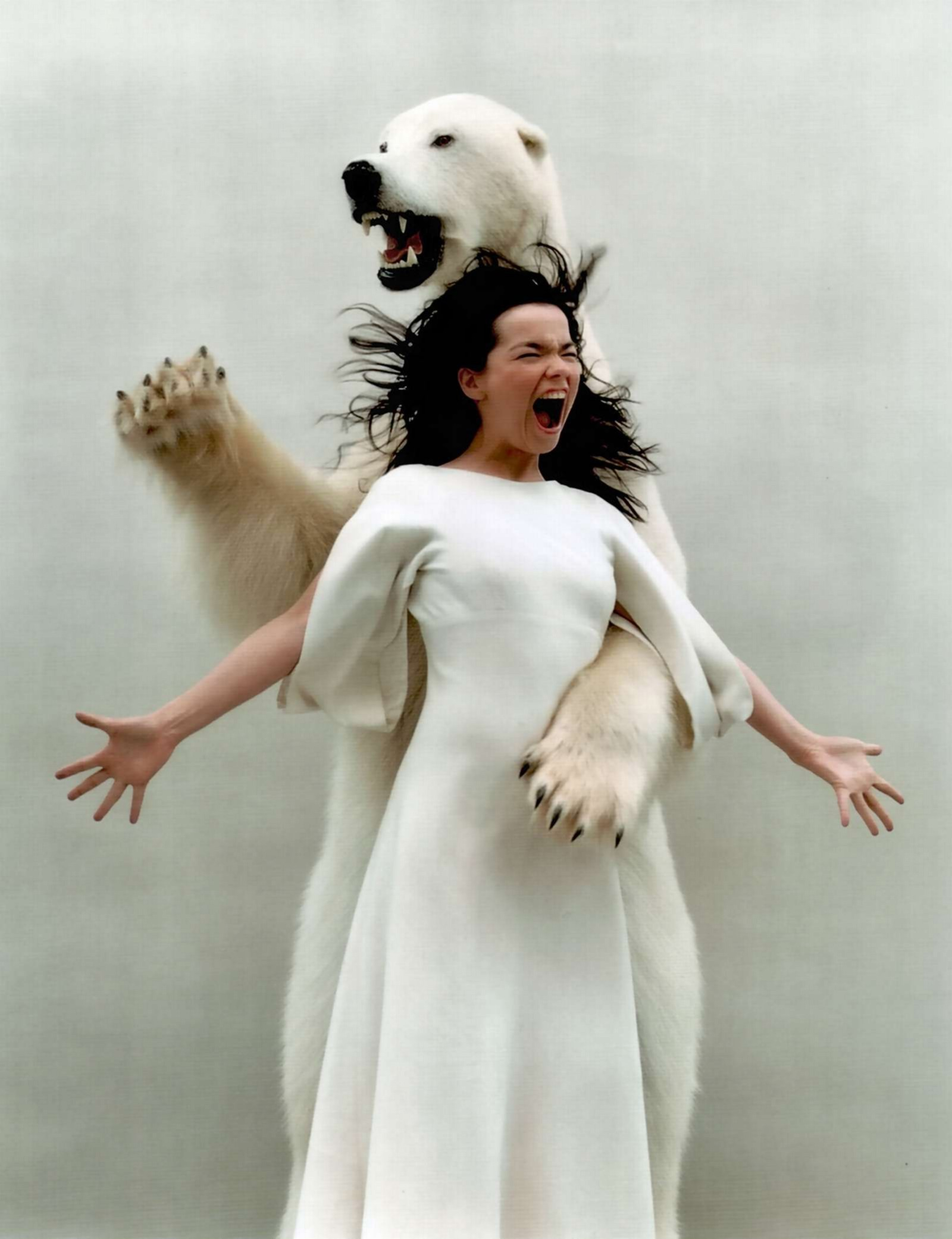 Björk Polar Bears HD Wallpaper