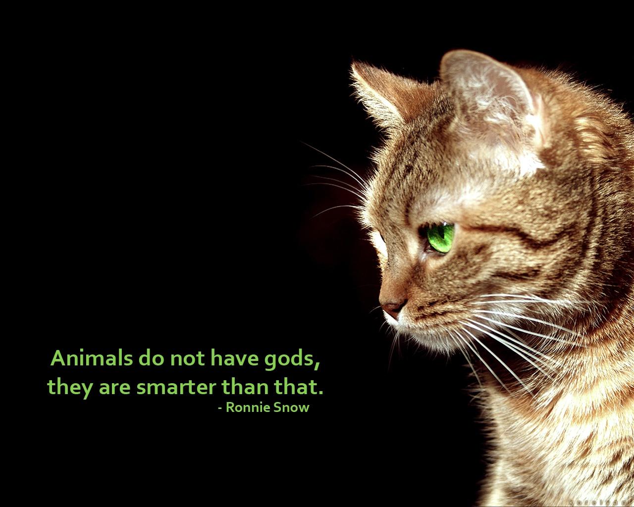 Animals Quotes Black_Cats_Animals_Quotes1N7B