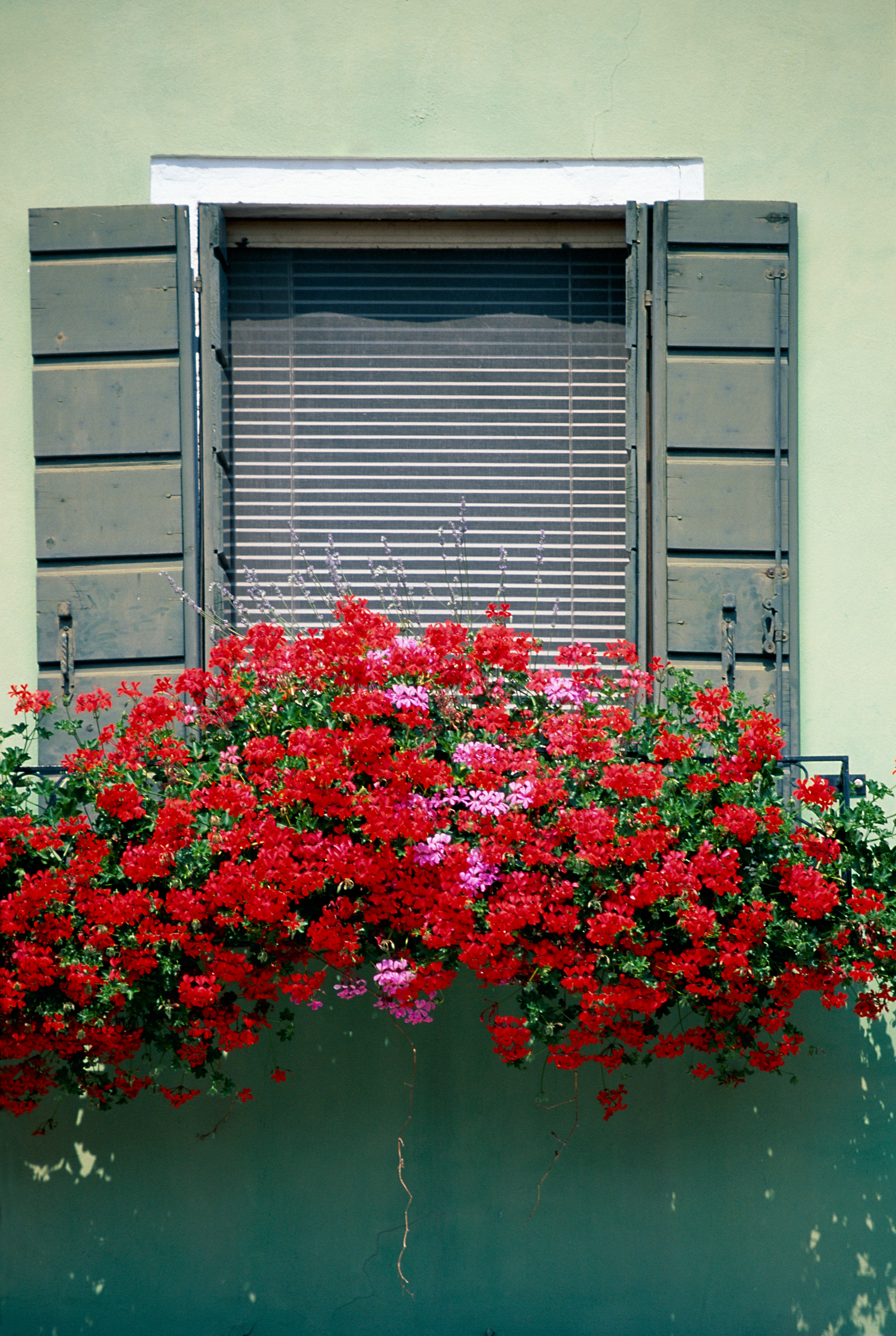 blooming window venice Italy HD Wallpaper