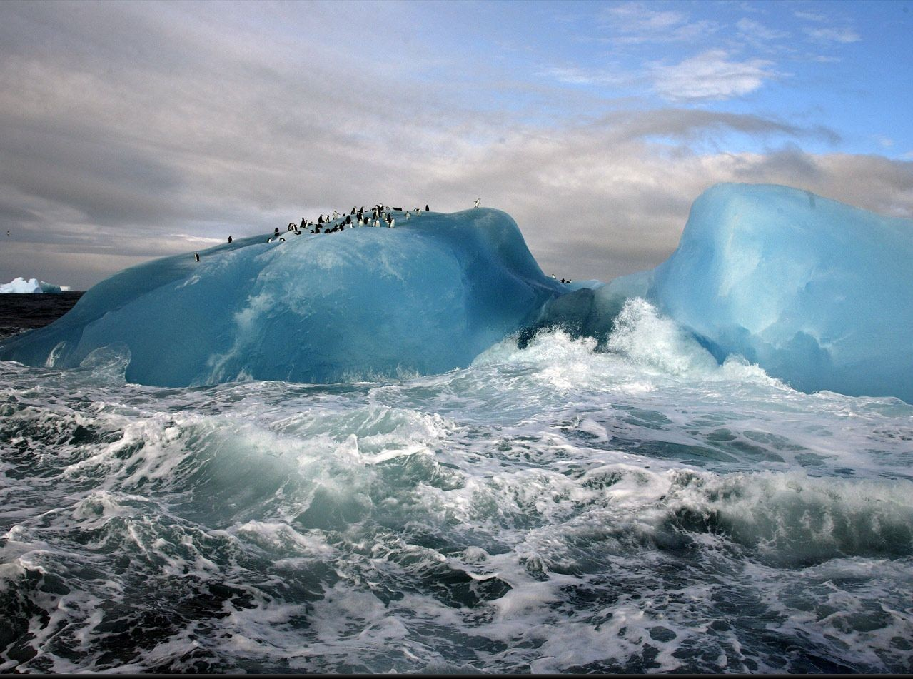 blue Penguins glacier HD Wallpaper