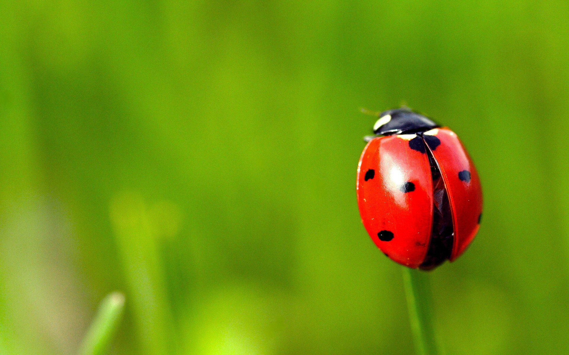 bugs macro ladybirds HD Wallpaper