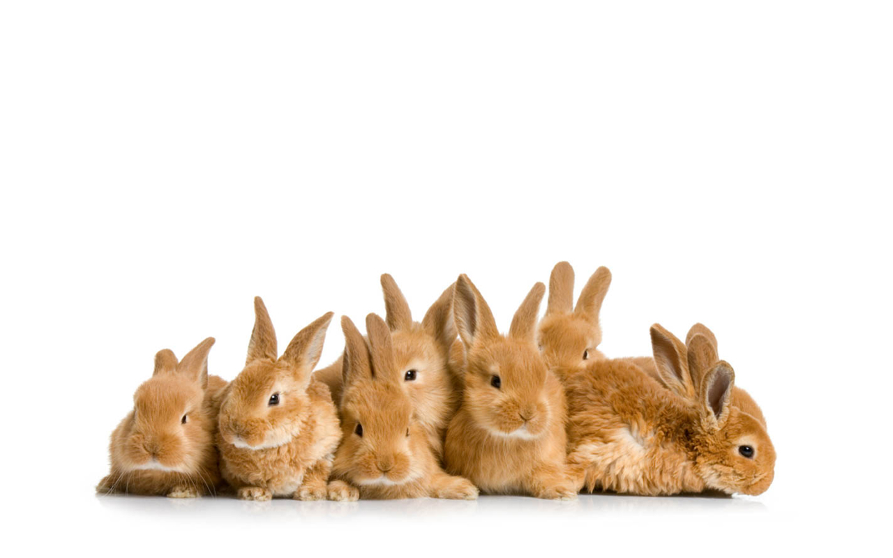 http://onlyhdwallpapers.com/wallpaper/bunny_cute_rabbit_desktop_1280x800_wallpaper-18809.png