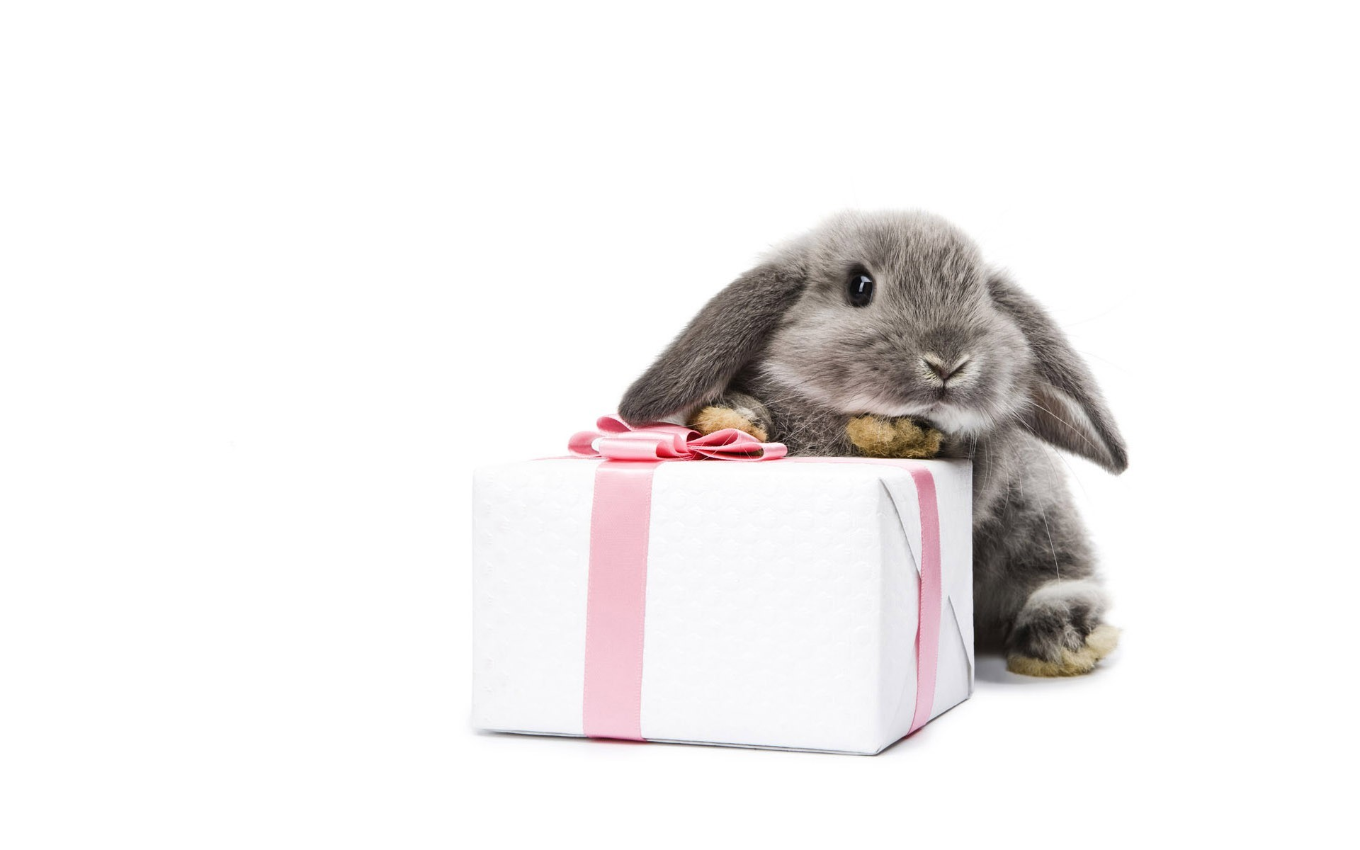 Bunnies Gifts Easter