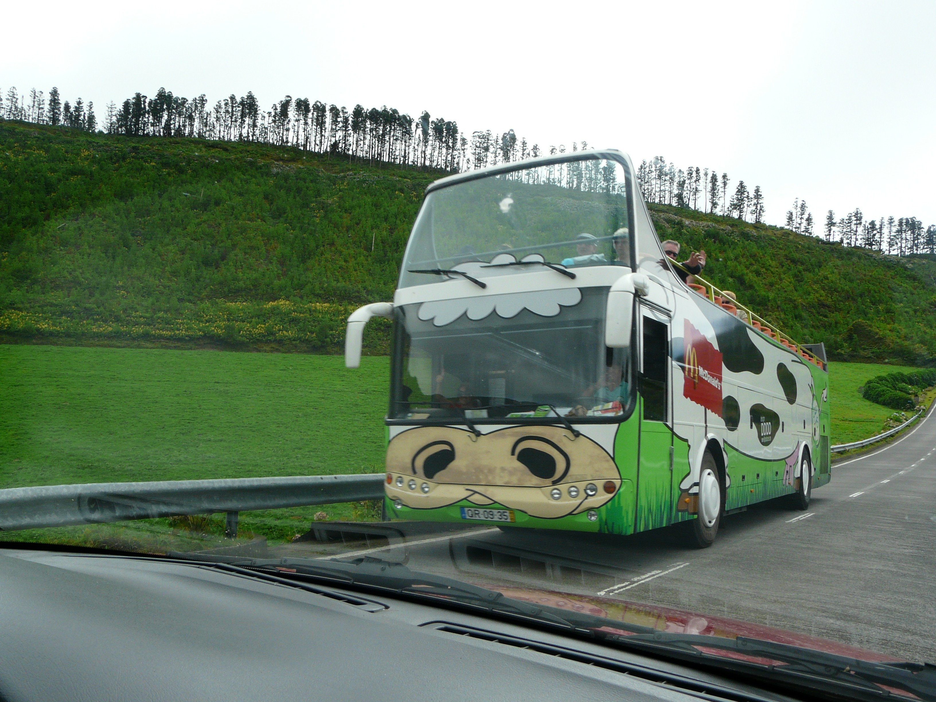 bus Cows Azores HD Wallpaper