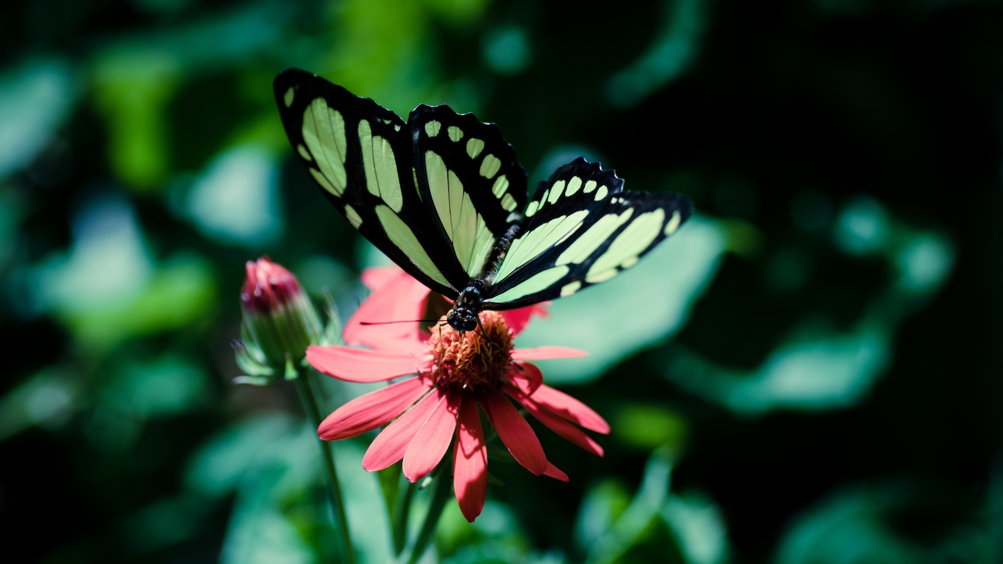 butterfly insect HD Wallpaper