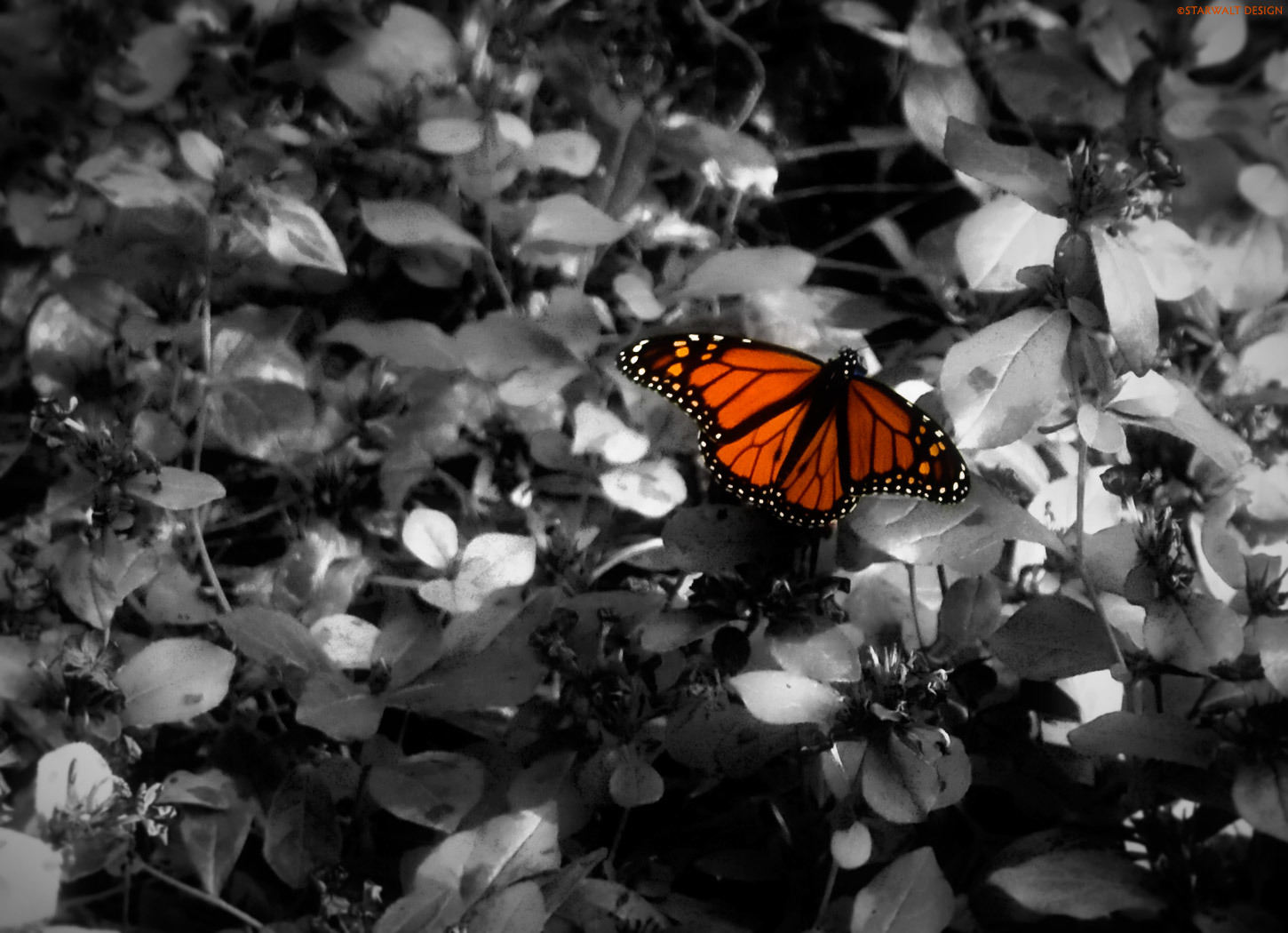 butterfly insects Creative artwork HD Wallpaper