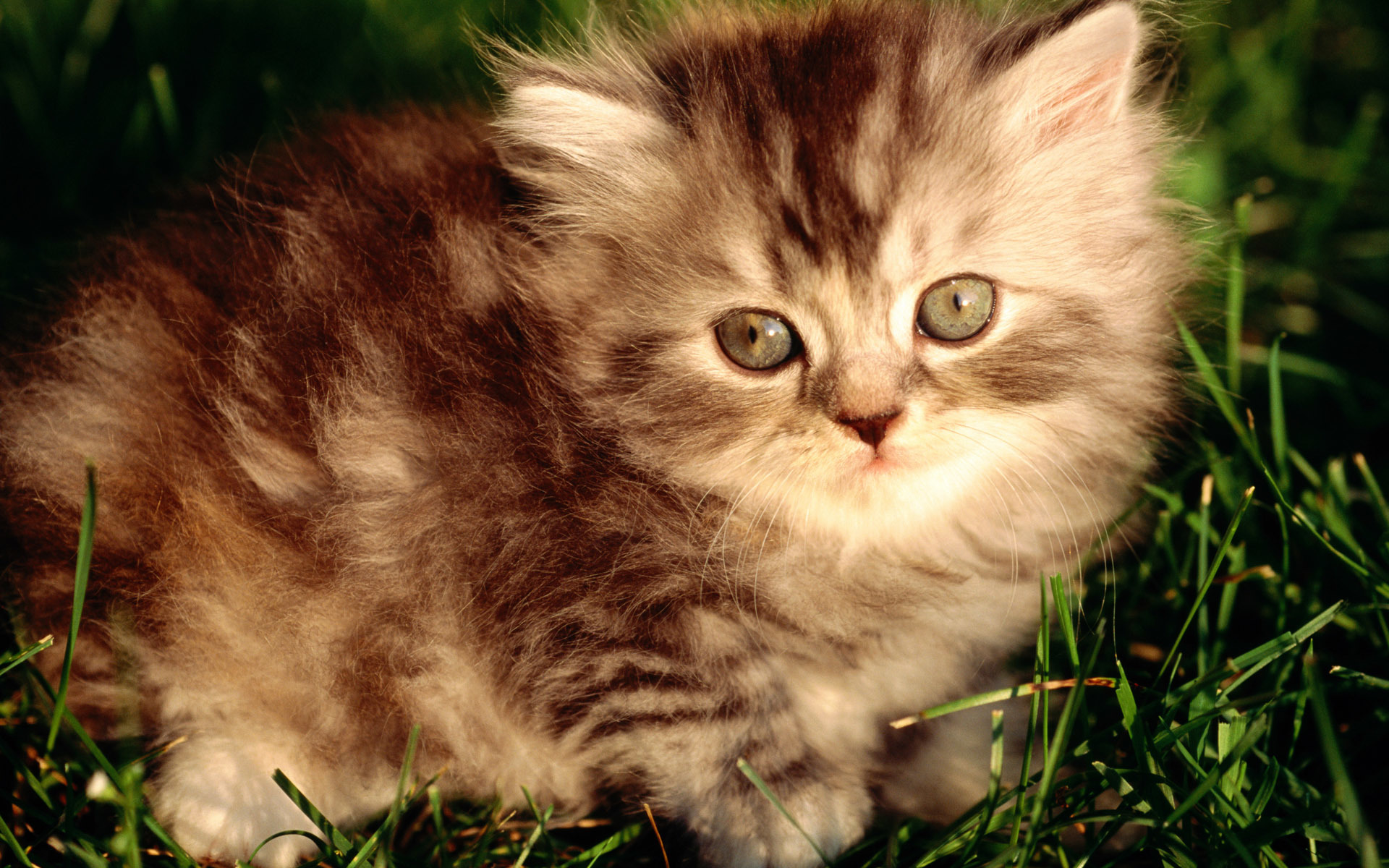 cat cats animal HD Wallpaper