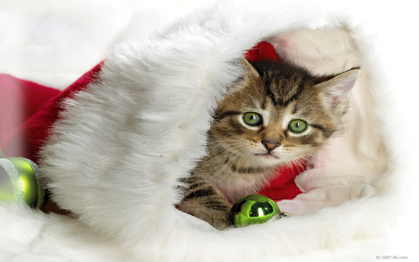 cats Animals Christmas Christmas HD Wallpaper