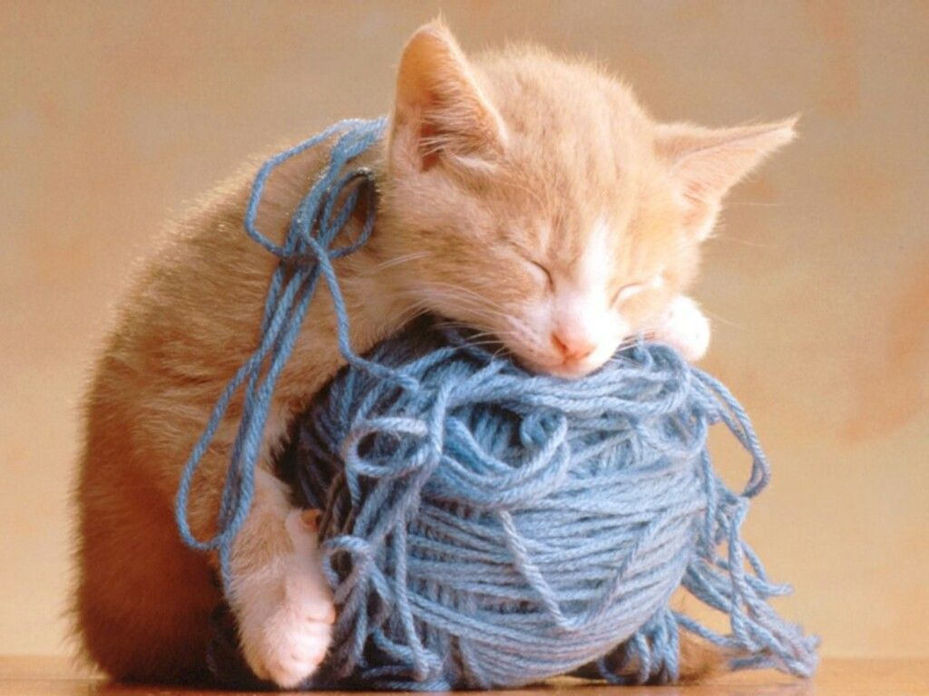 cats Animals Kittens yarn HD Wallpaper