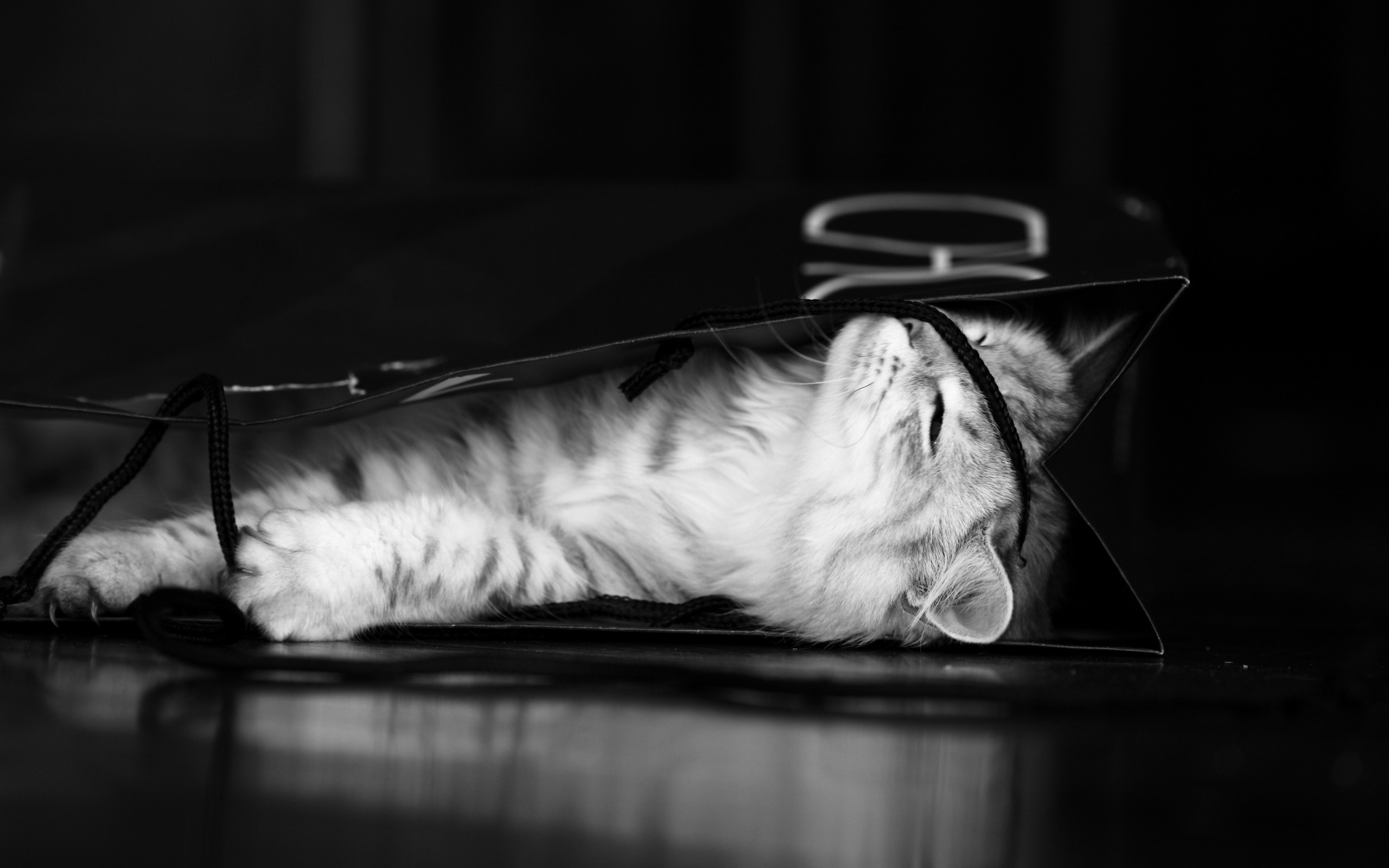 cats Animals monochrome Kittens HD Wallpaper