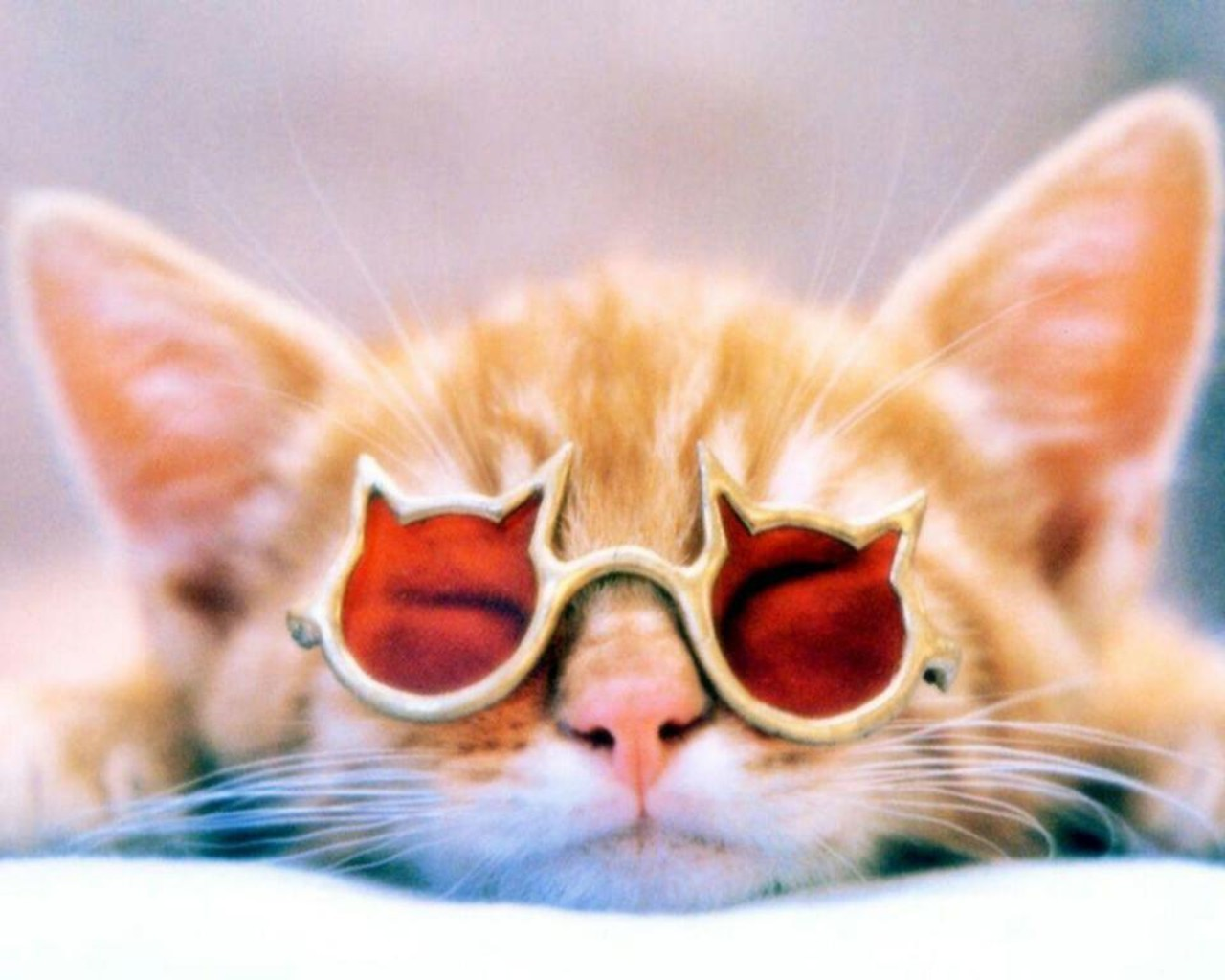 cats Animals sunglasses HD Wallpaper