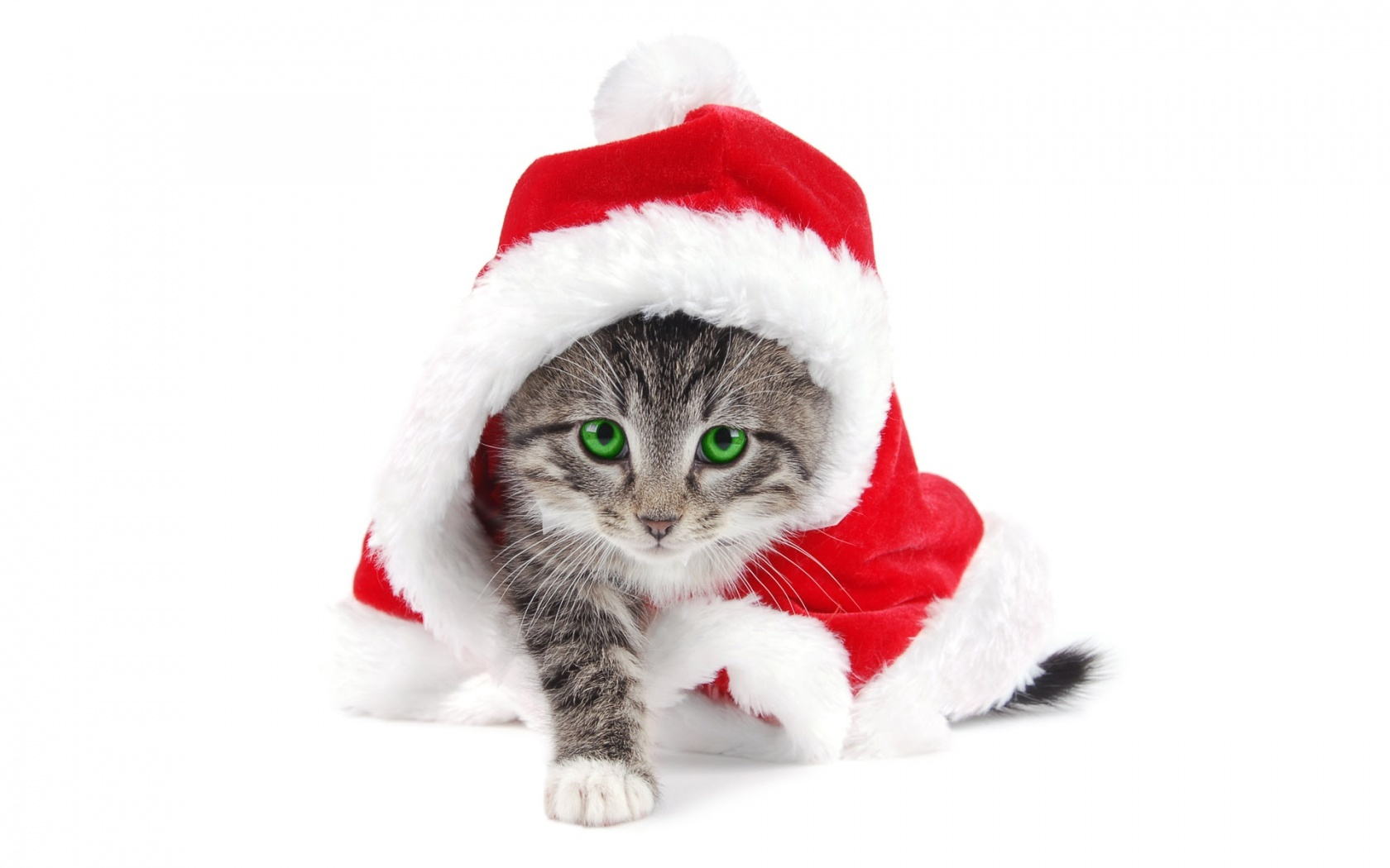 cats Christmas santa claus HD Wallpaper