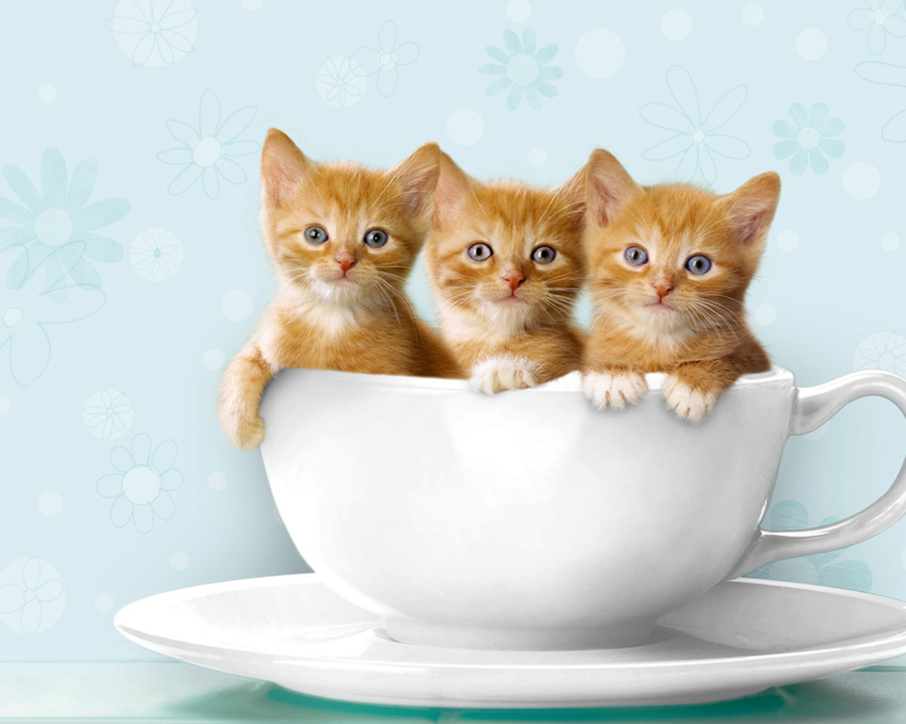 cats cups Kittens three HD Wallpaper