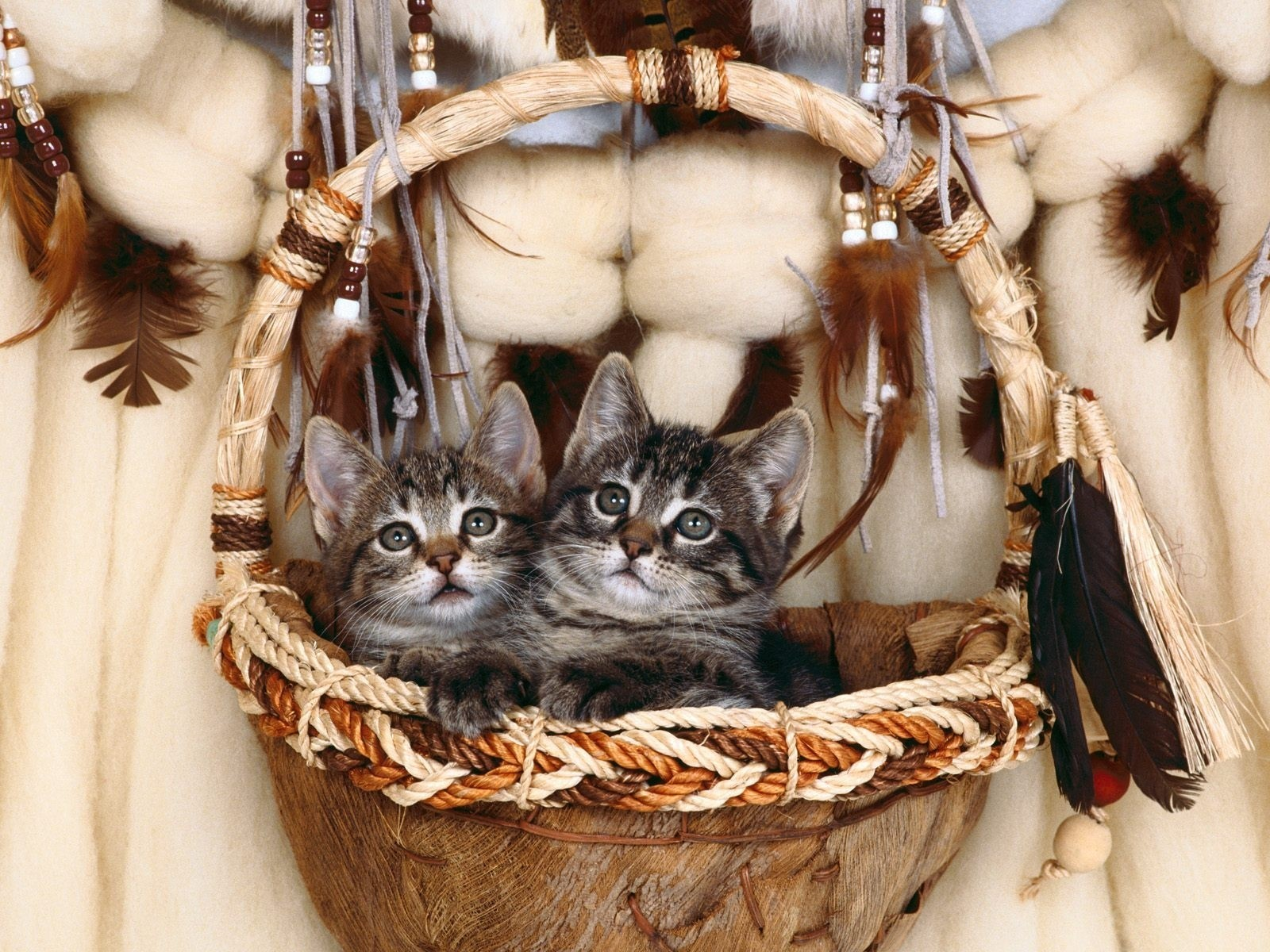 cats feathers Kittens baskets HD Wallpaper