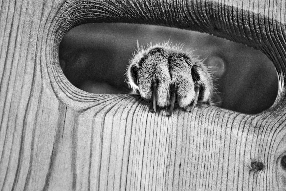 cats grey monochrome paws HD Wallpaper