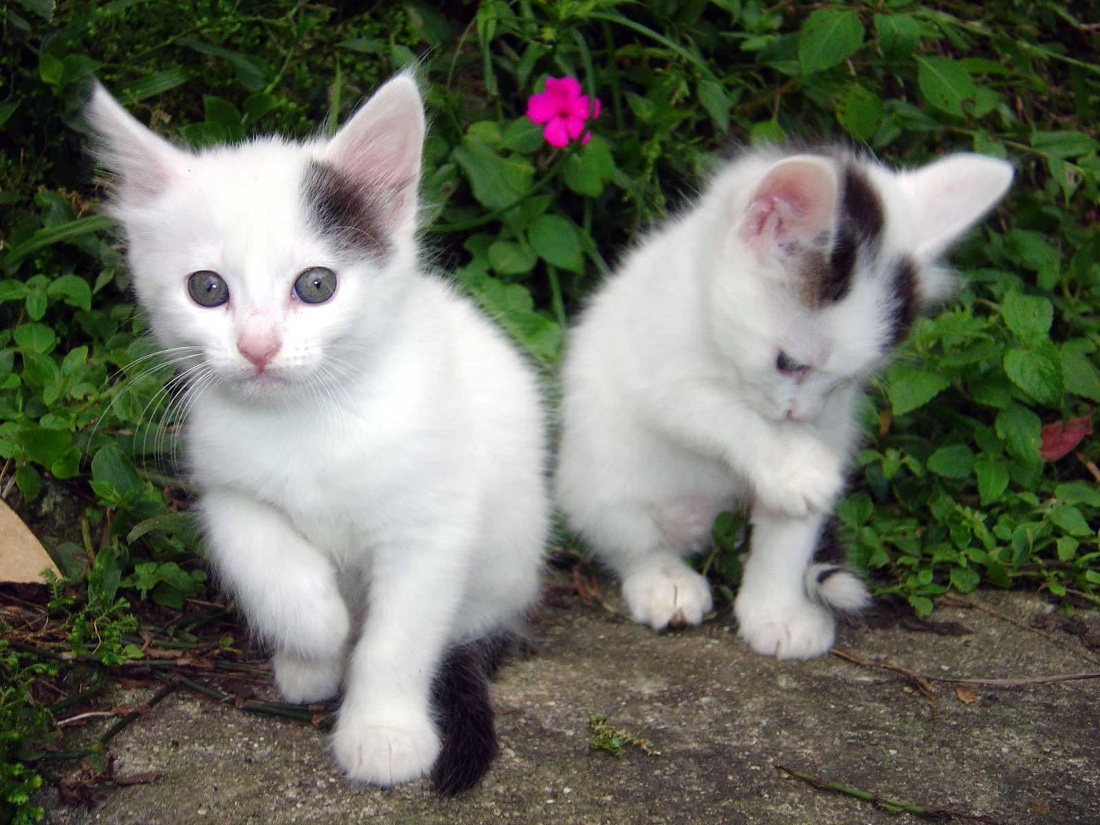 http://onlyhdwallpapers.com/wallpaper/cats_desktop_1600x1200_wallpaper-96208.jpeg