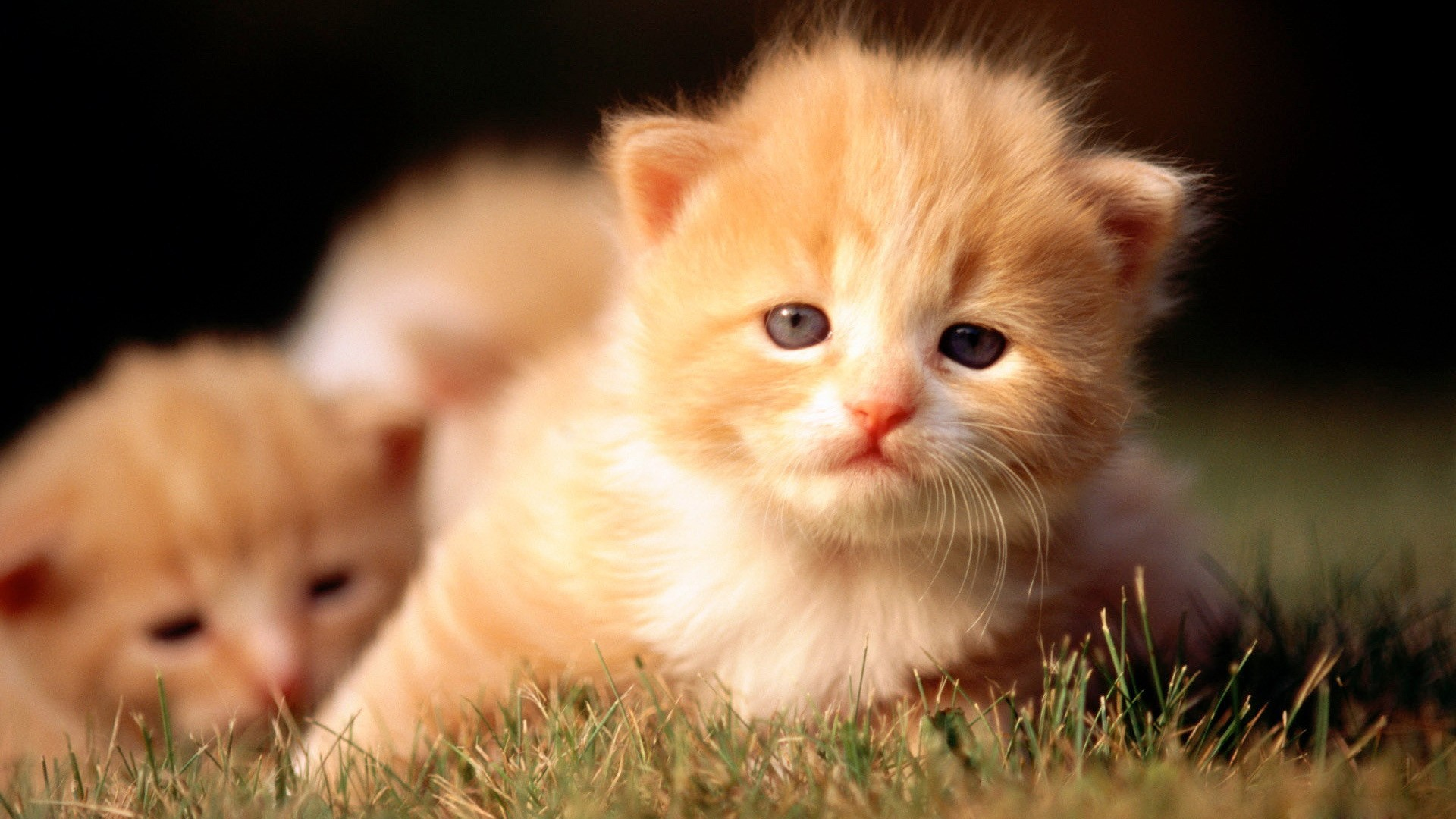 cats Kittens HD Wallpaper