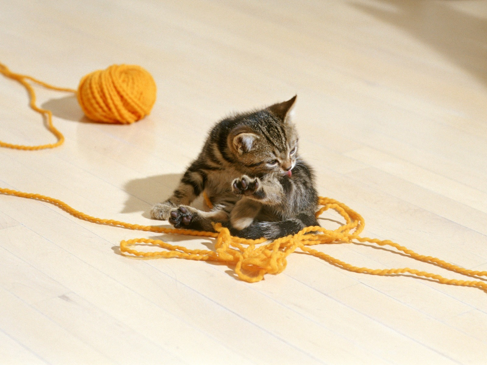 cats Kittens yarn HD Wallpaper