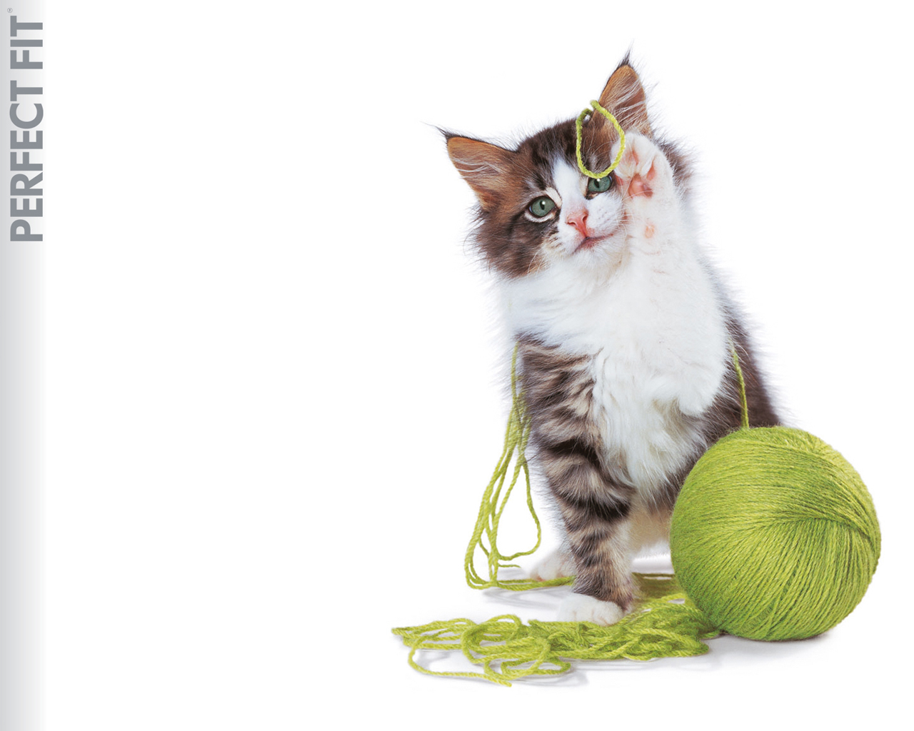 cats Kittens yarn playing HD Wallpaper