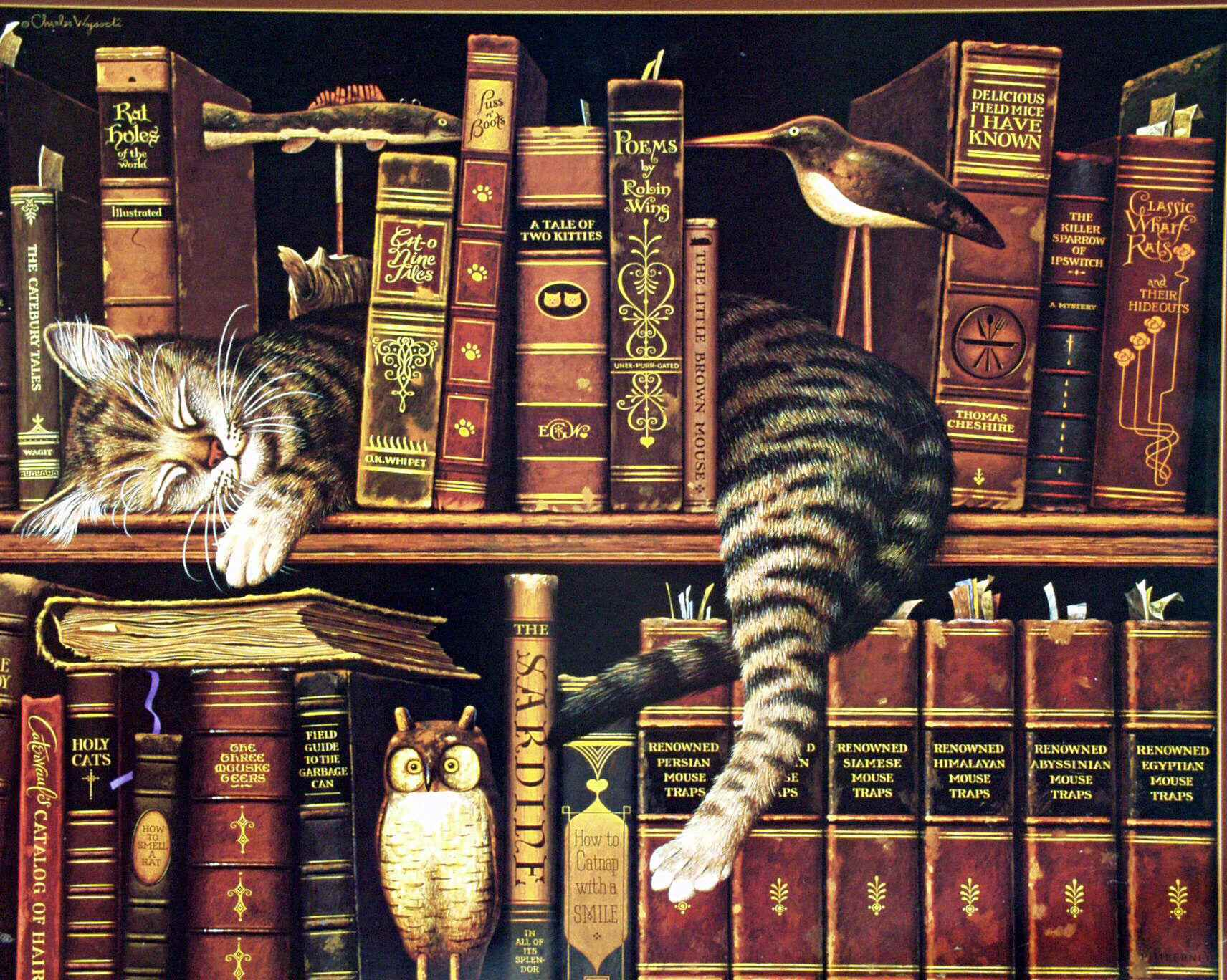 cats library books owls book cat owl HD Wallpaper