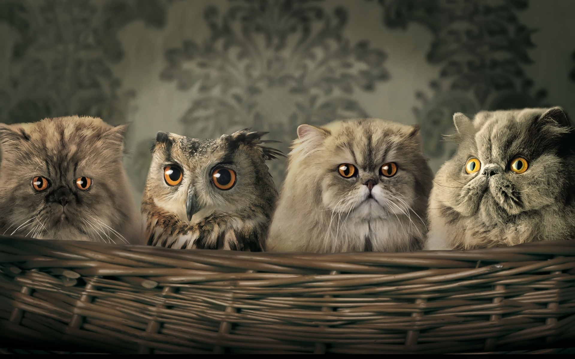 cats Owls camouflage HD Wallpaper