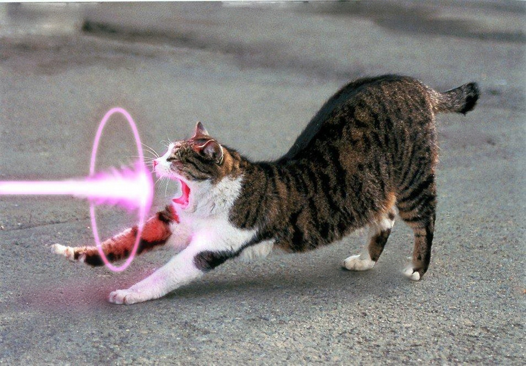 cats purple Lasers HD Wallpaper