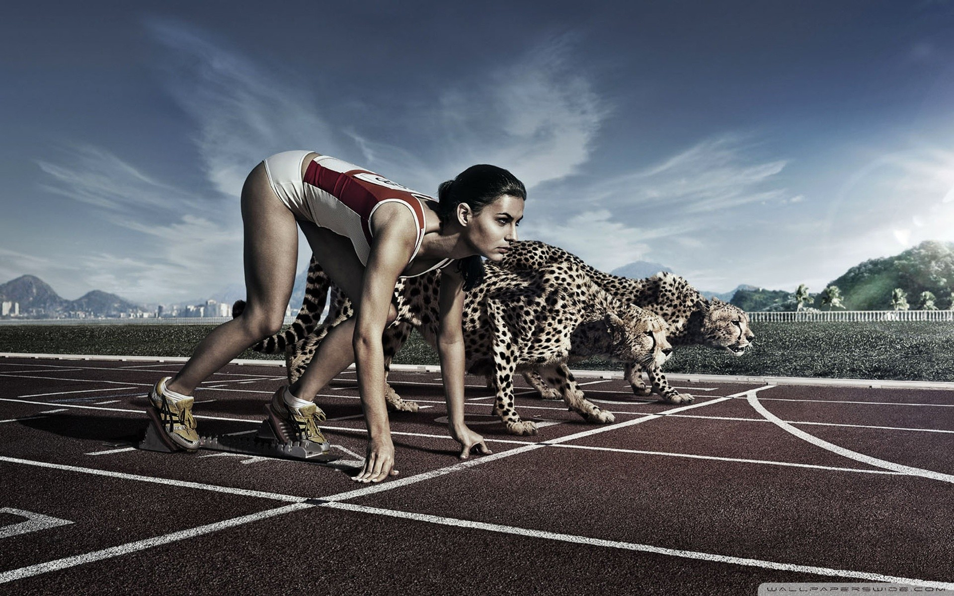 cheetahs running track races HD Wallpaper