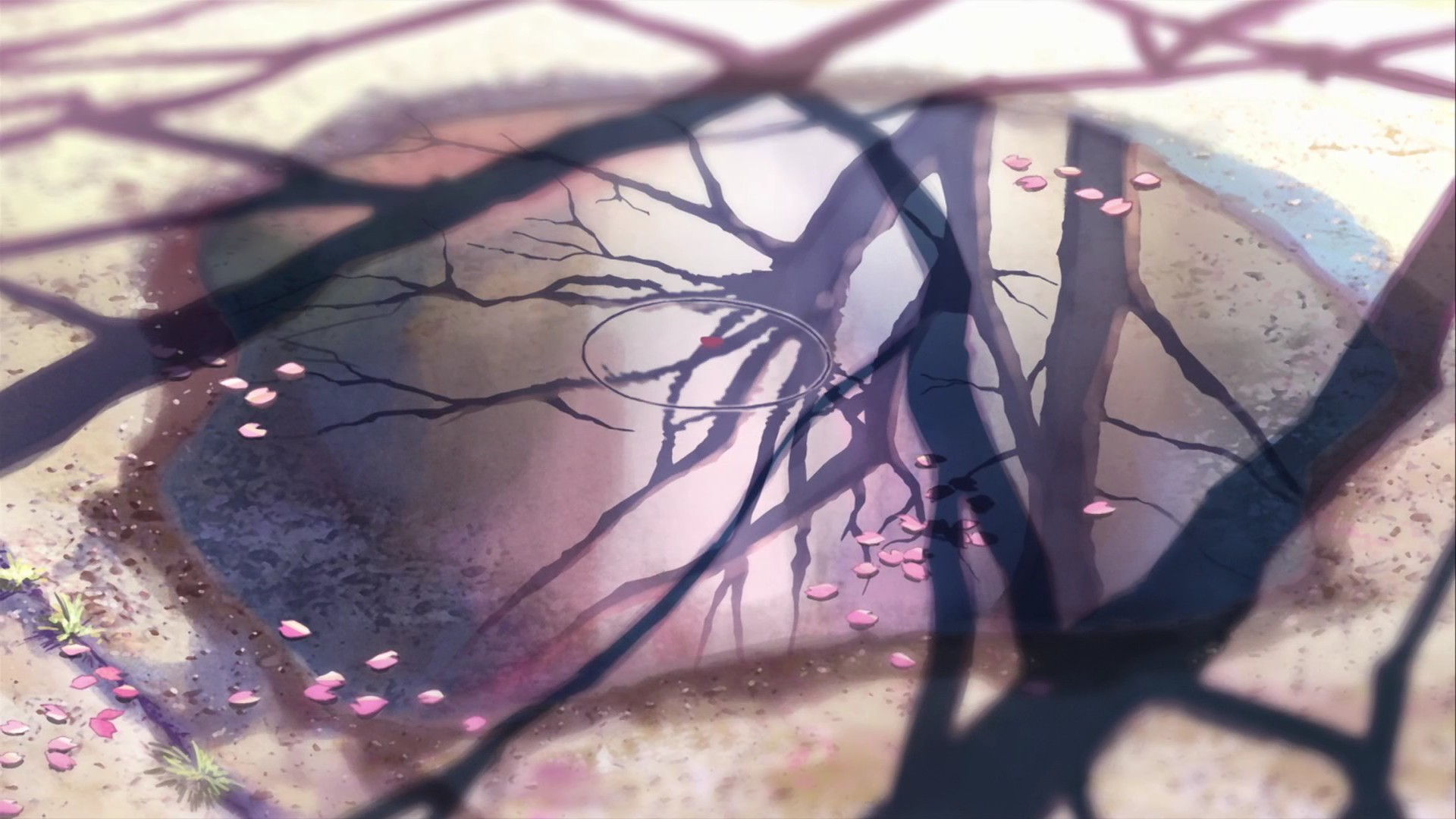 cherry blossoms Makoto Shinkai HD Wallpaper