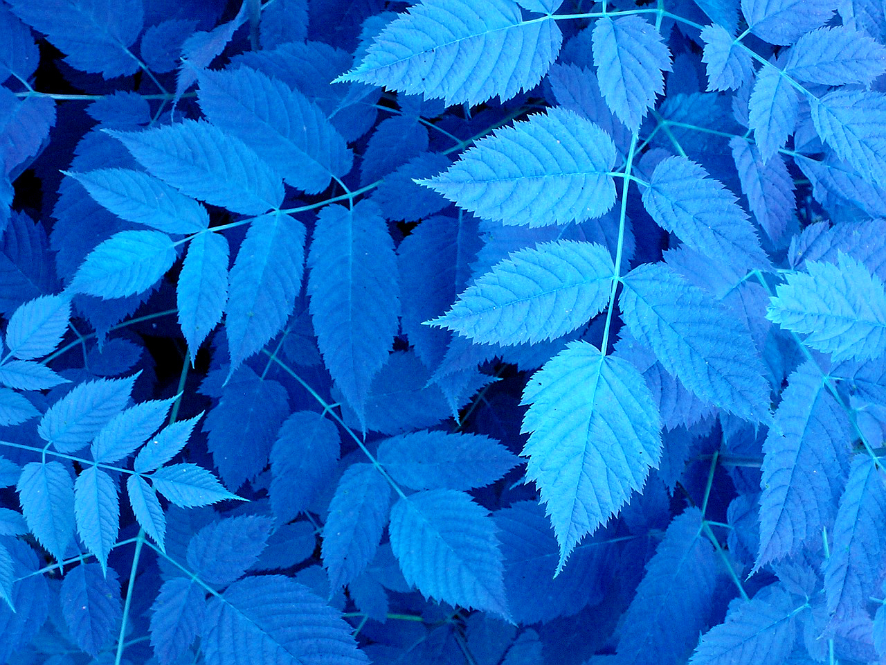 close-up blue leaves Plants