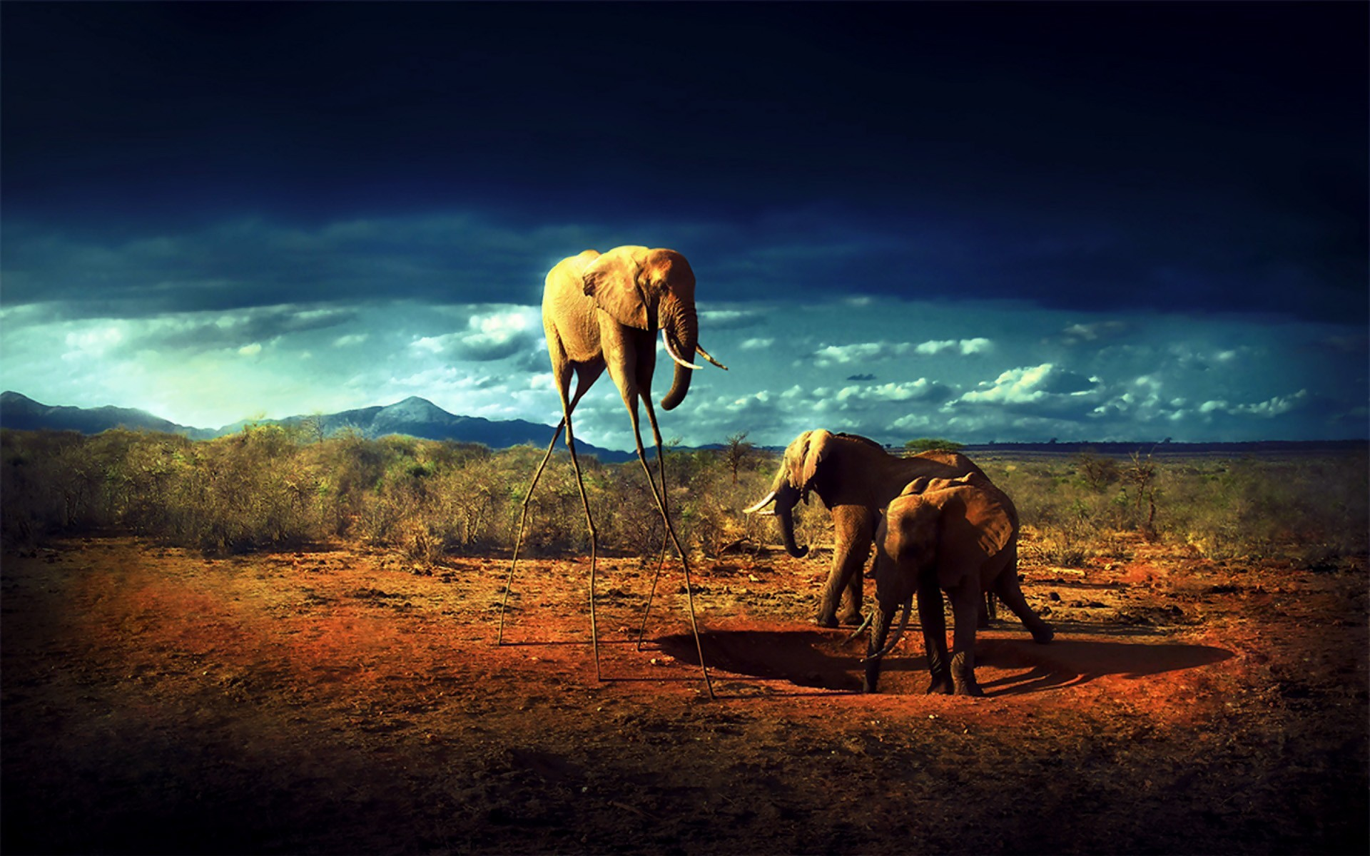 clouds Animals elephants HD Wallpaper