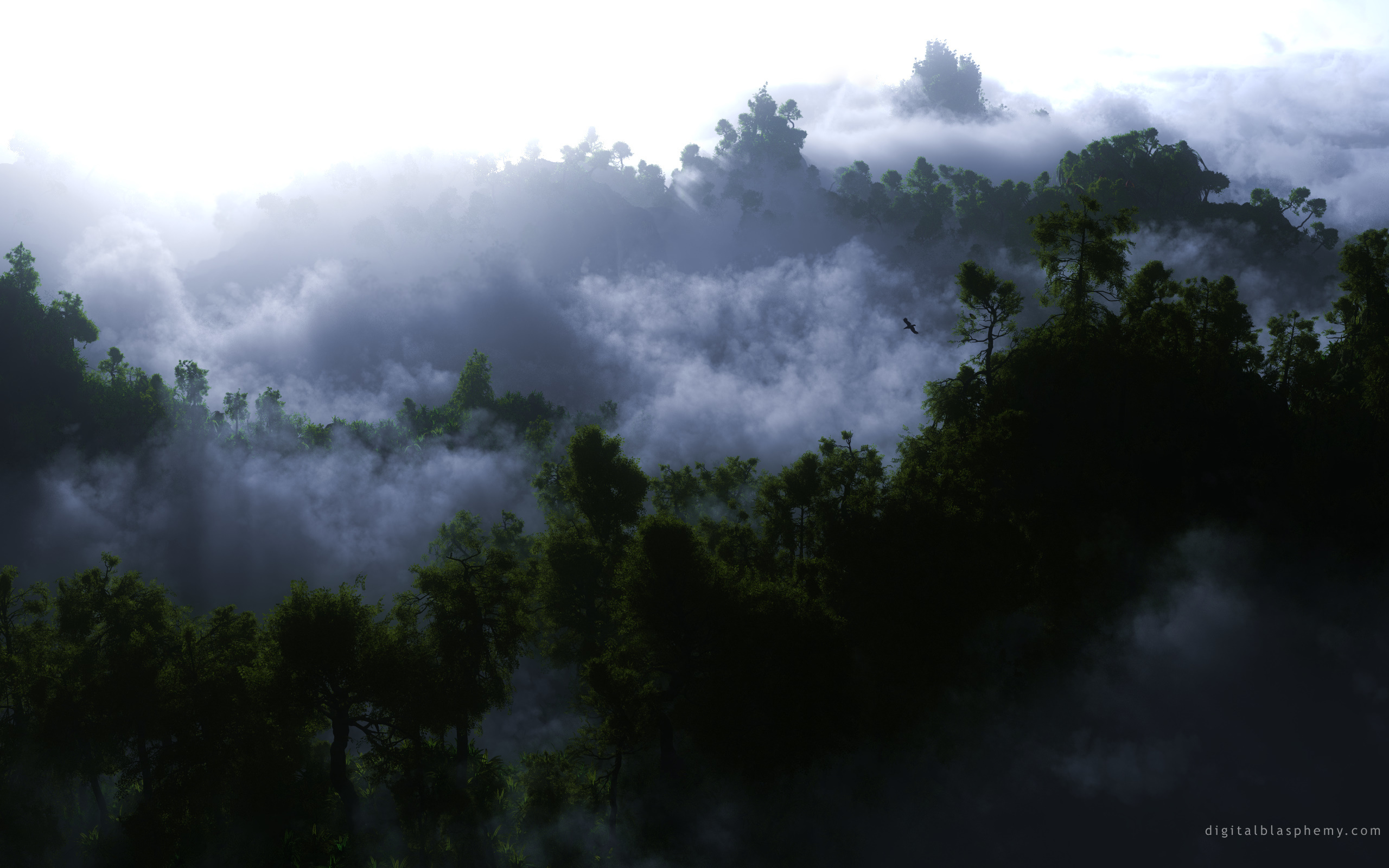clouds forest photography fog HD Wallpaper