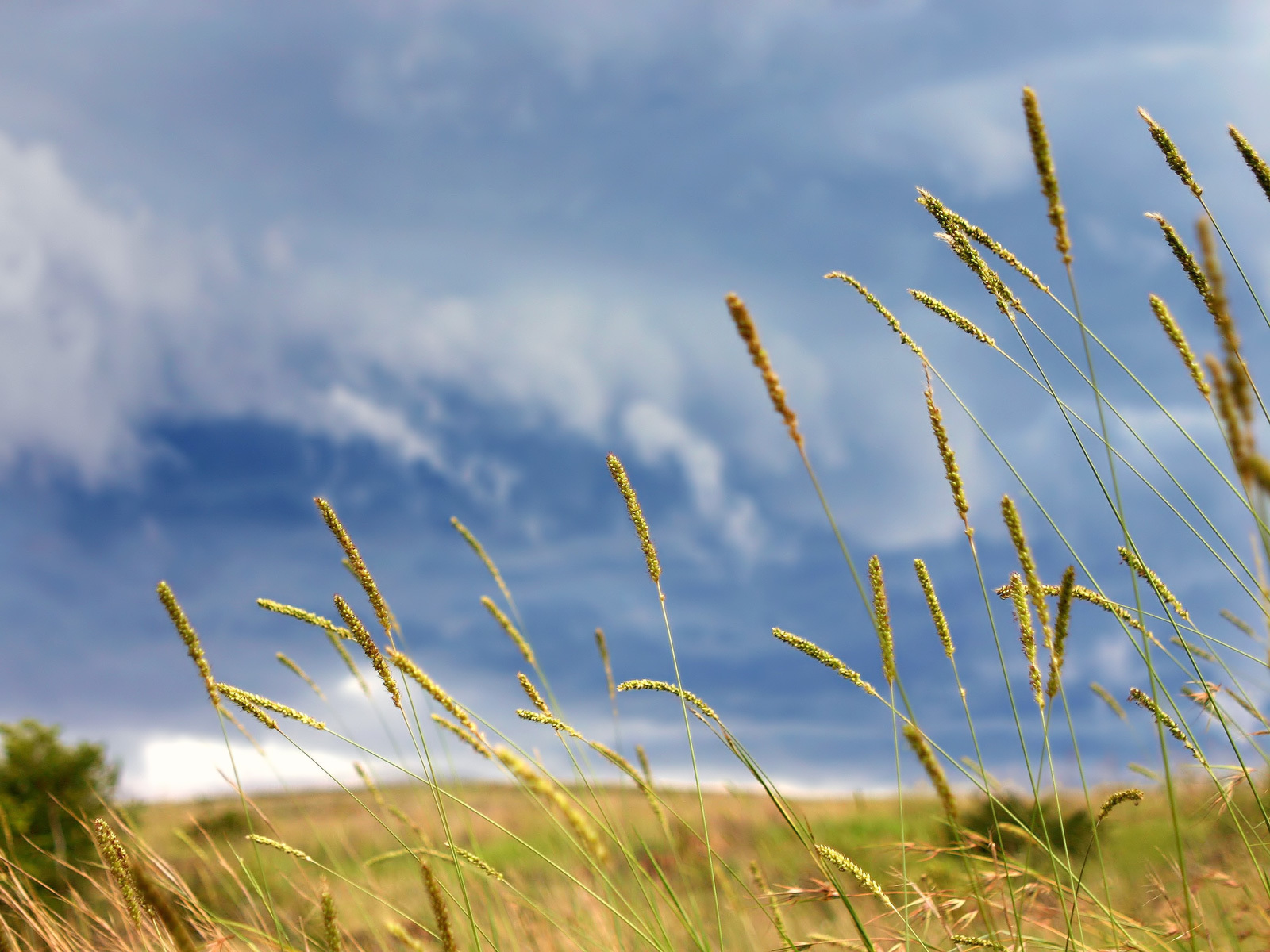 clouds Landscapes nature wheat