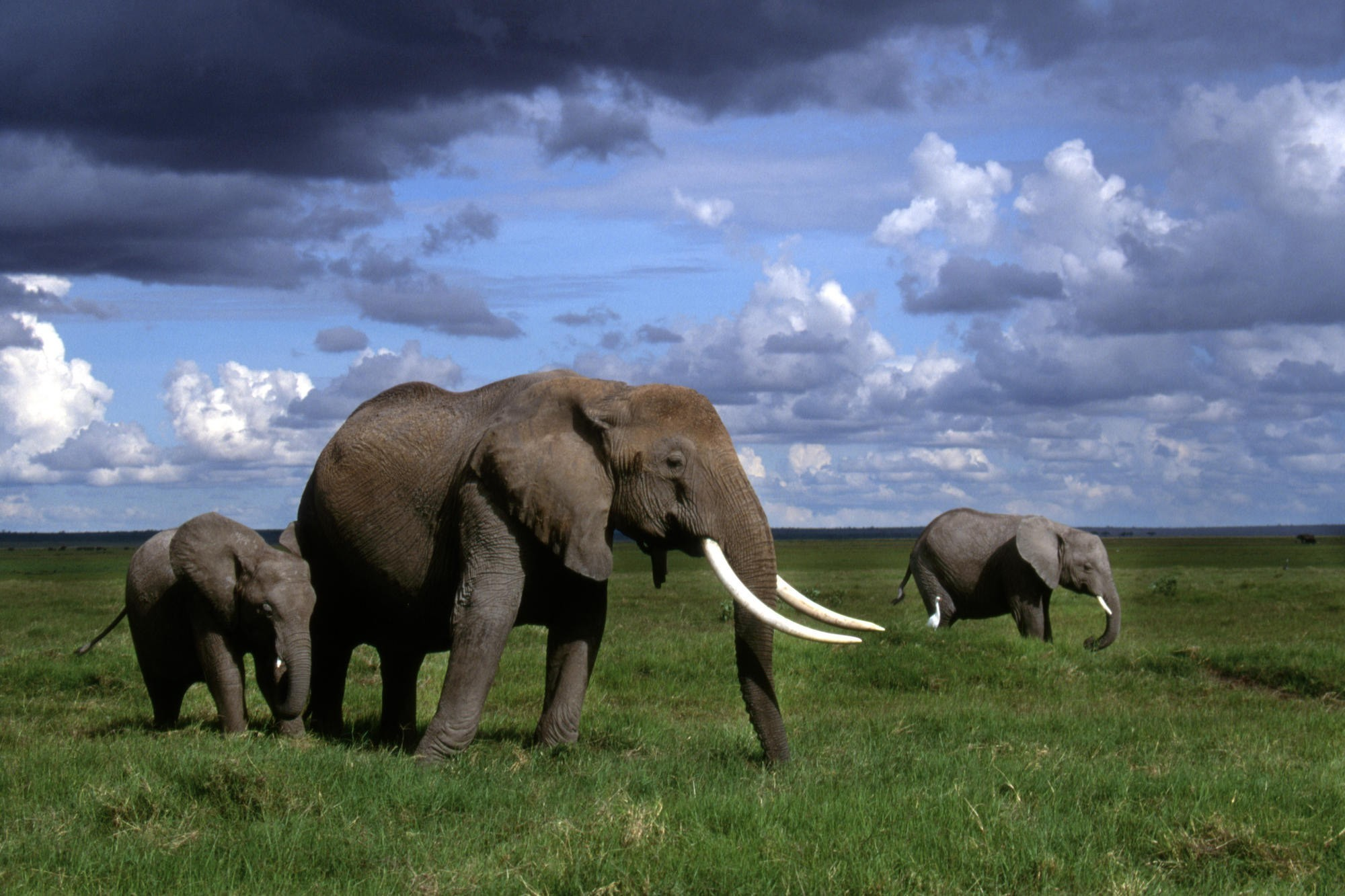 clouds nature Animals elephants HD Wallpaper
