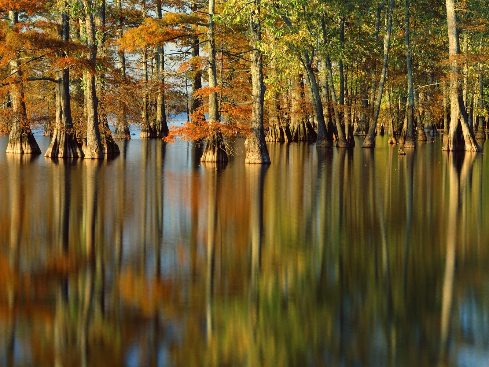 cypress water autumn forests