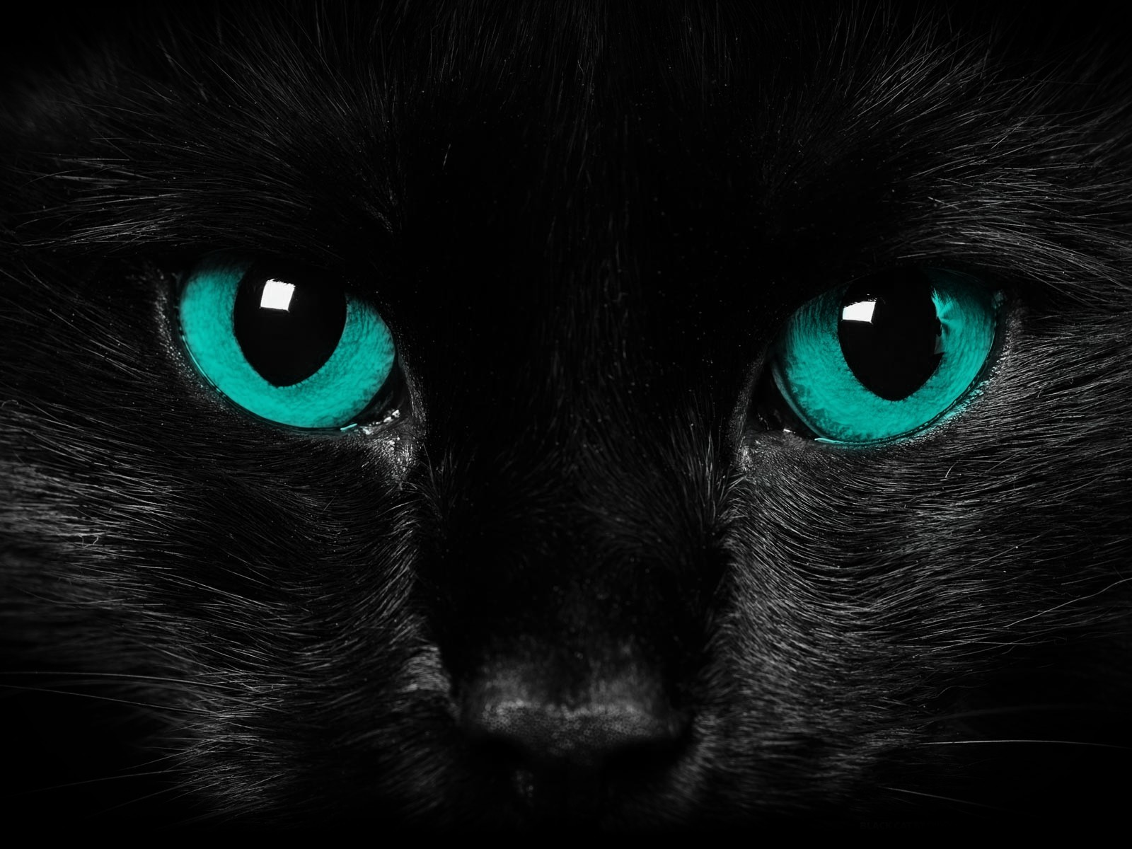 dark cats blue eyes HD Wallpaper