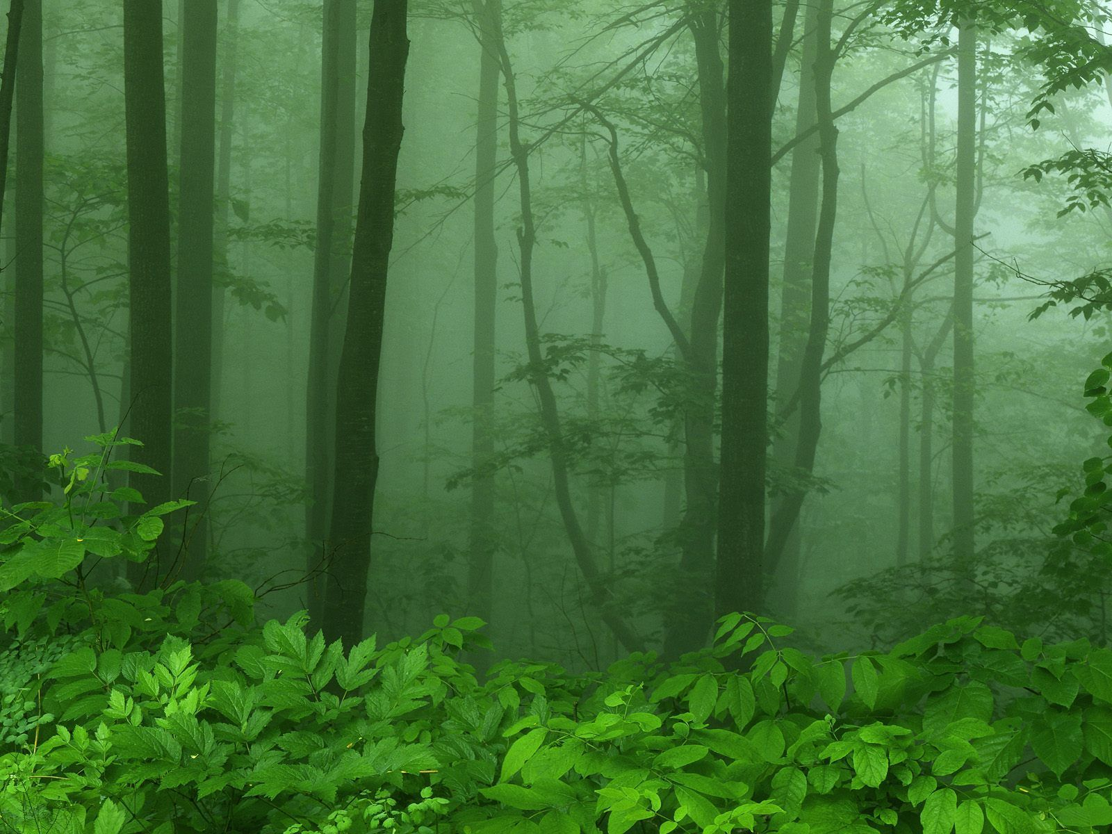 dawn forests leaves fog HD Wallpaper