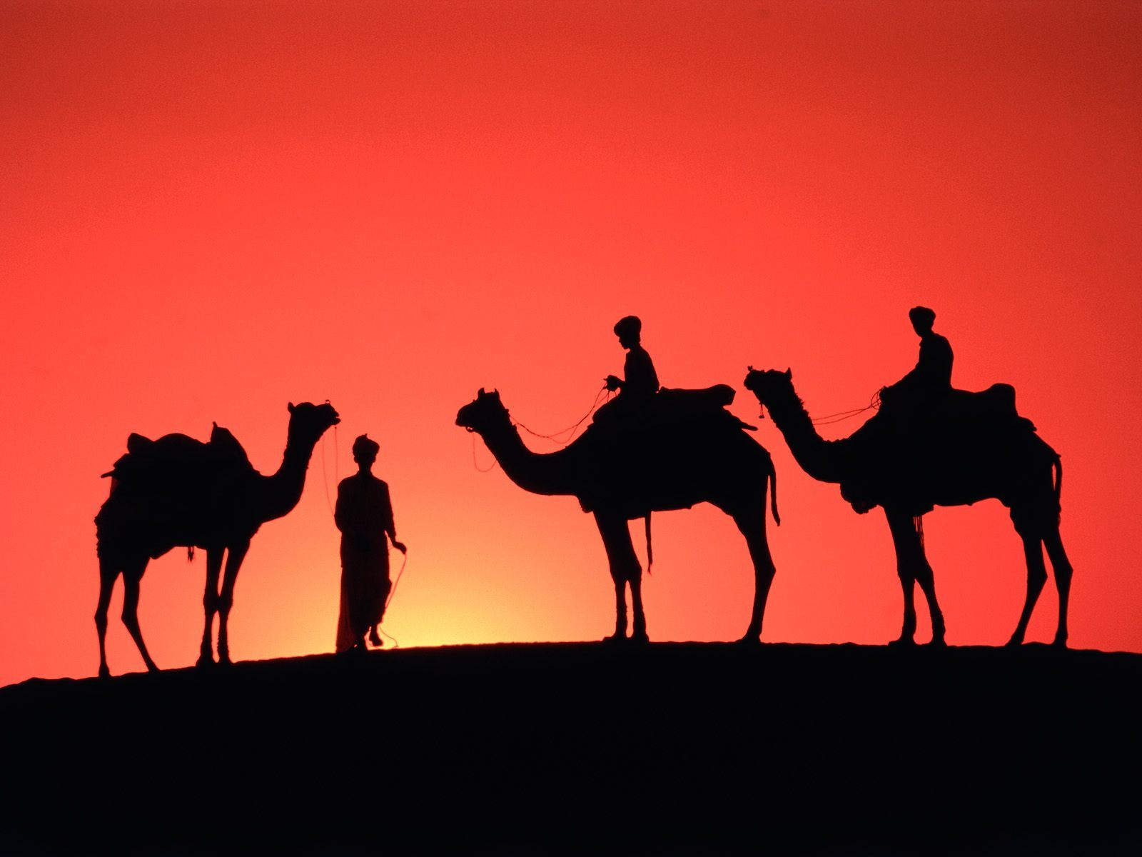 desert silhouette Camels HD Wallpaper
