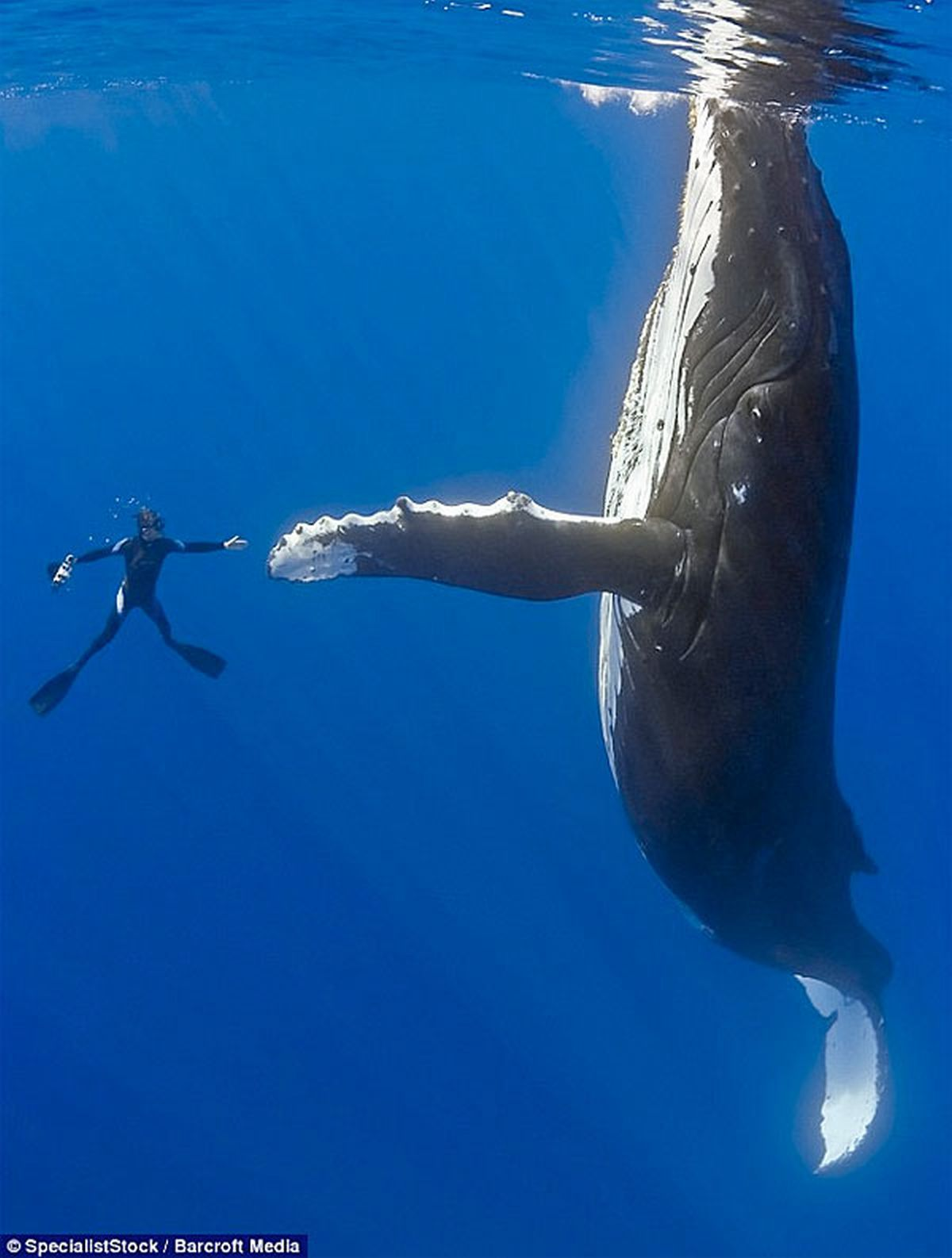 diver Whales high five HD Wallpaper