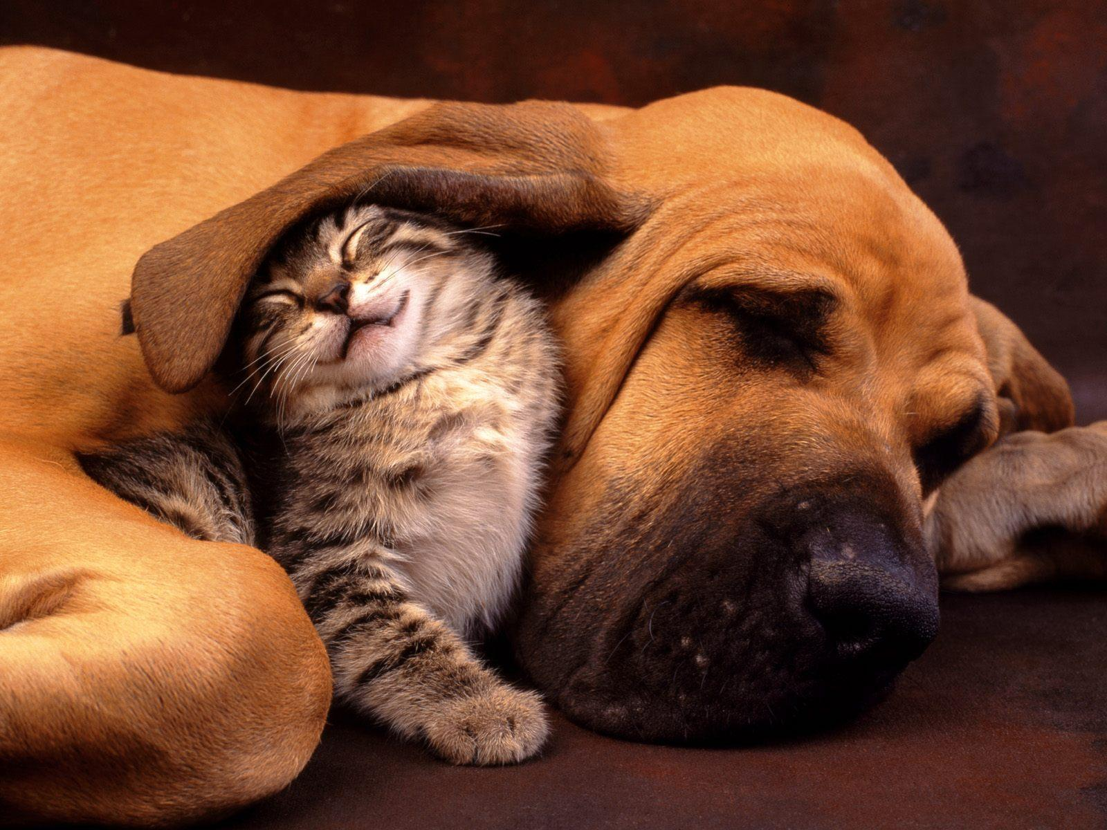 dog ears cats Animals HD Wallpaper