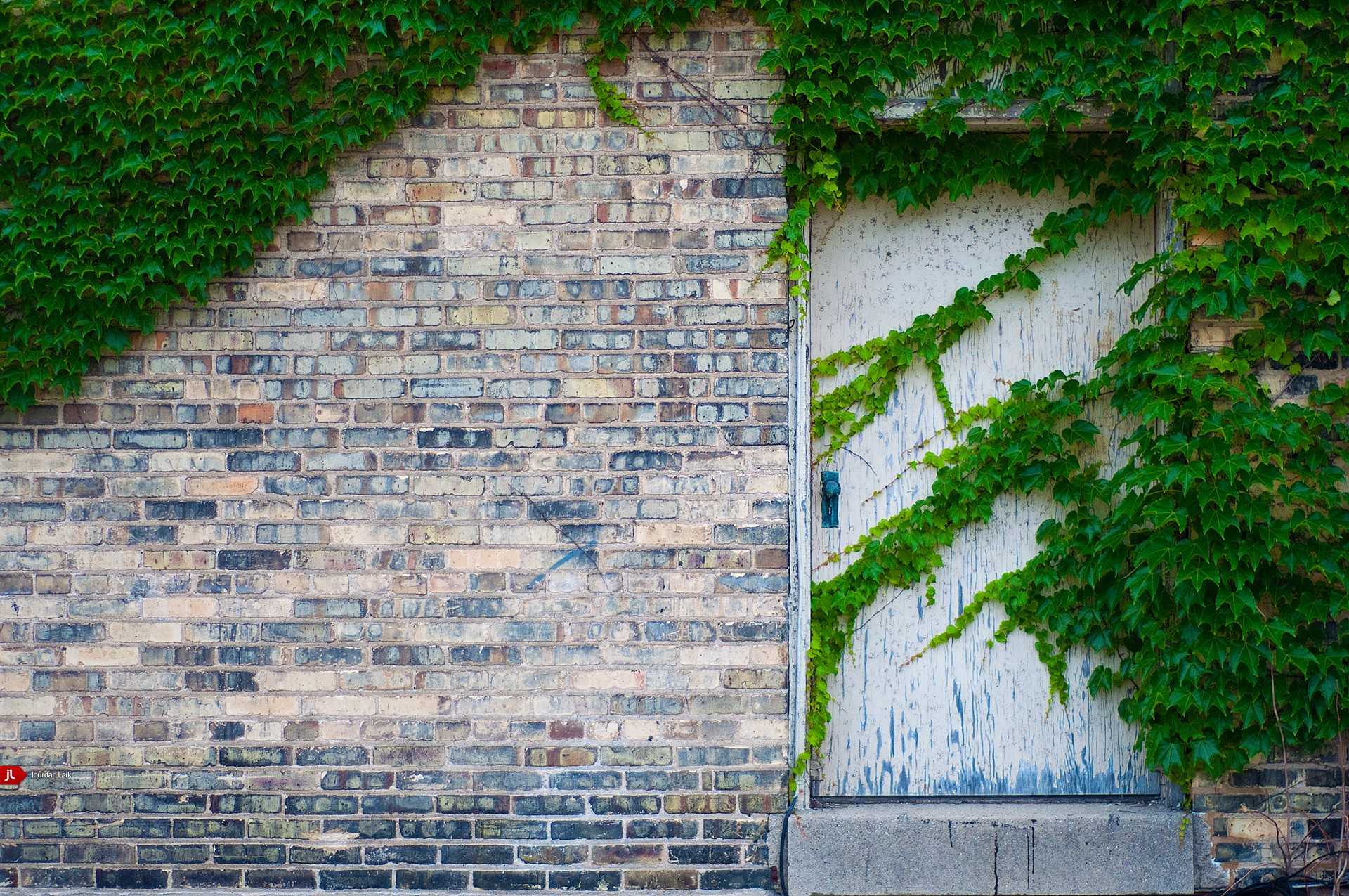 doors ivy wall Bricks HD Wallpaper