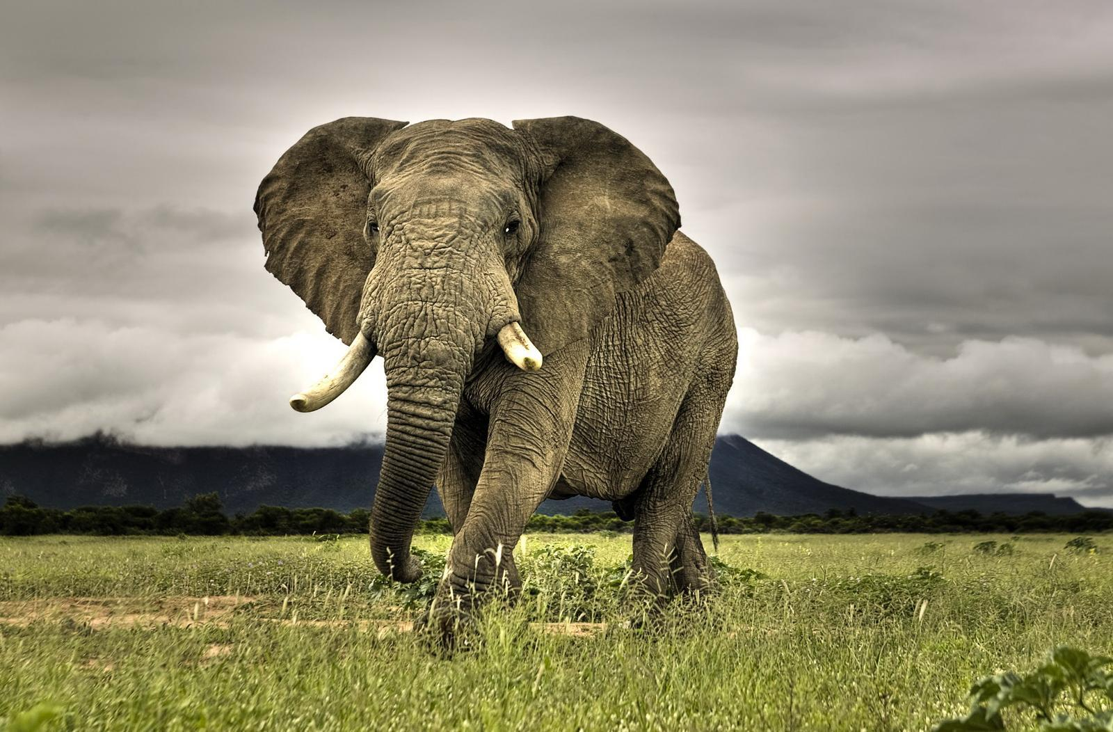 elephants HD Wallpaper