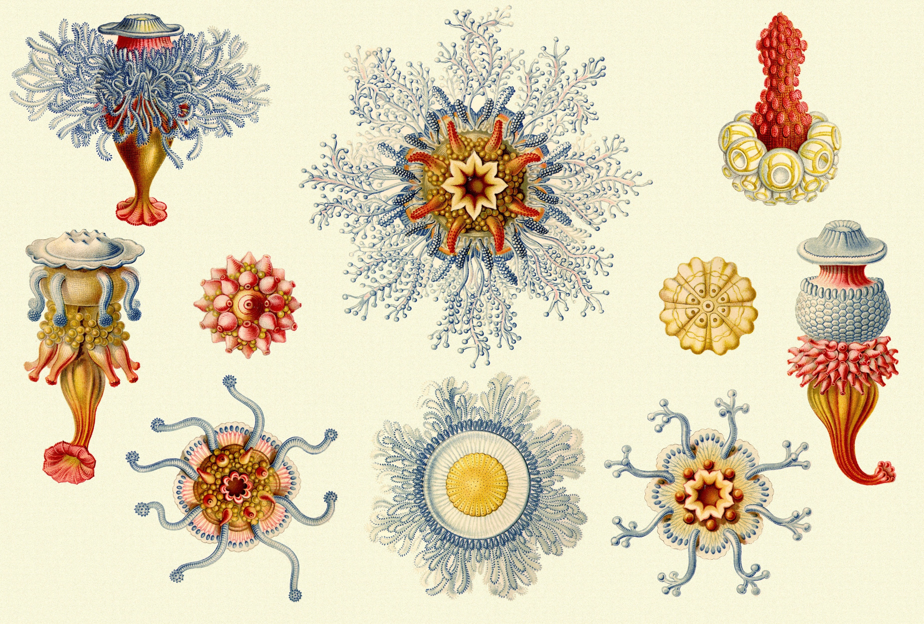 Ernst Haeckel Art Forms