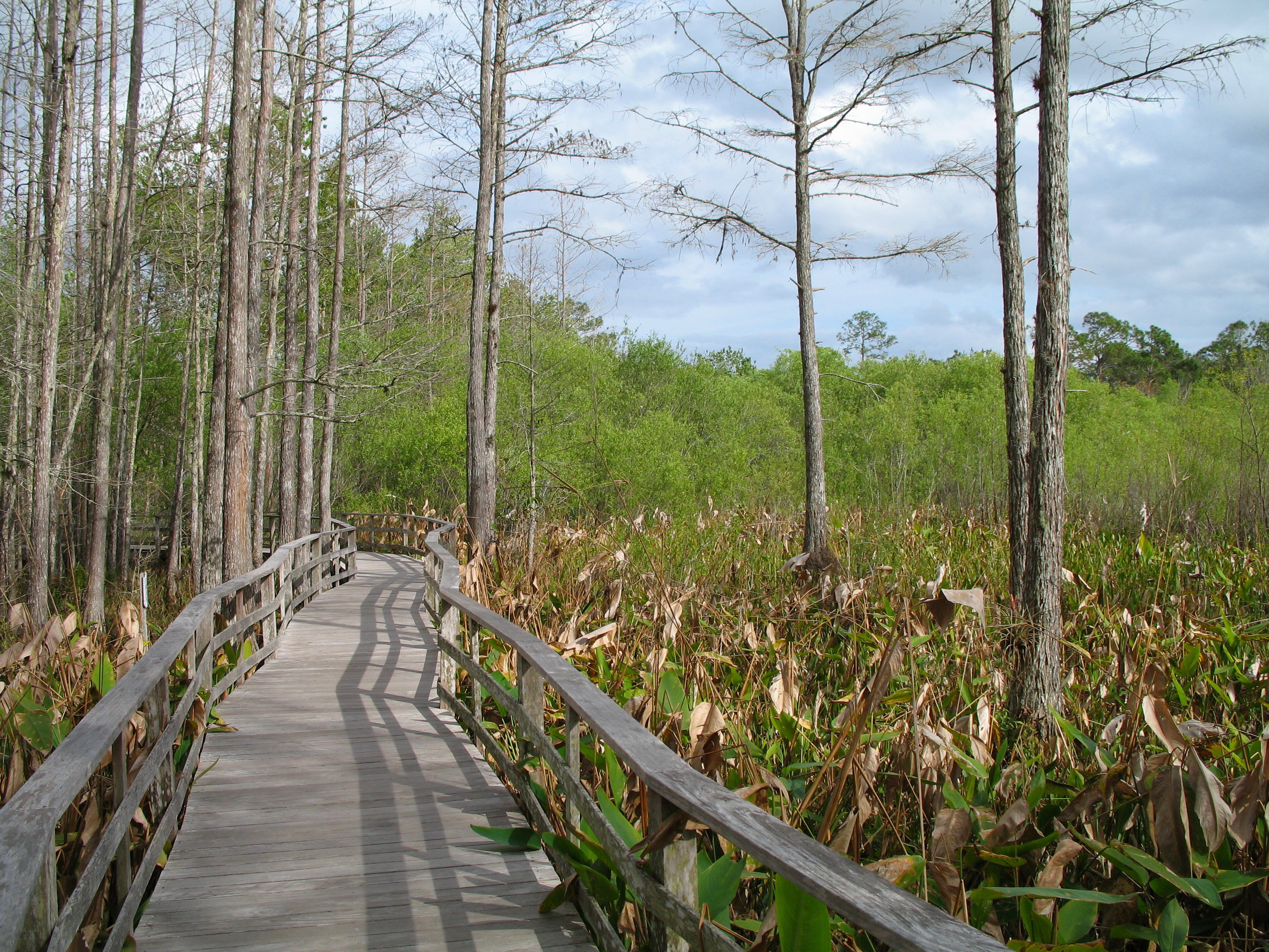 everglades National Park high HD Wallpaper