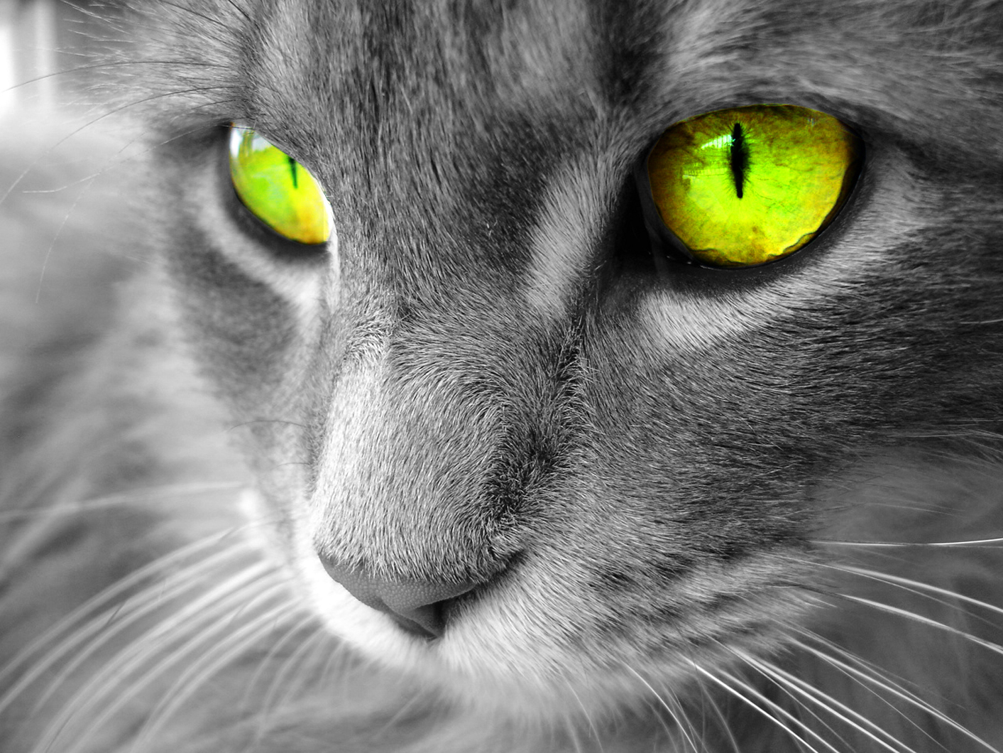 eyes cats limes green