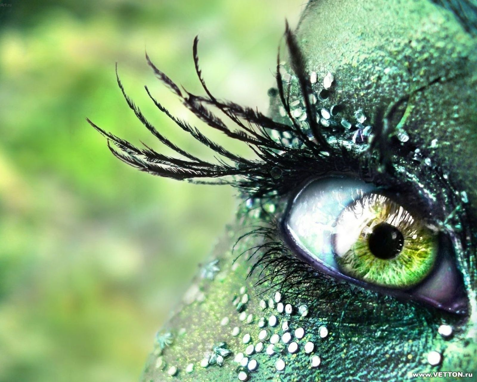 eyes fashion macro body HD Wallpaper