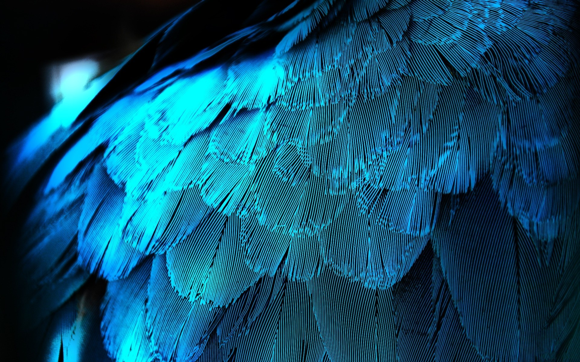 feathers iridescence HD Wallpaper