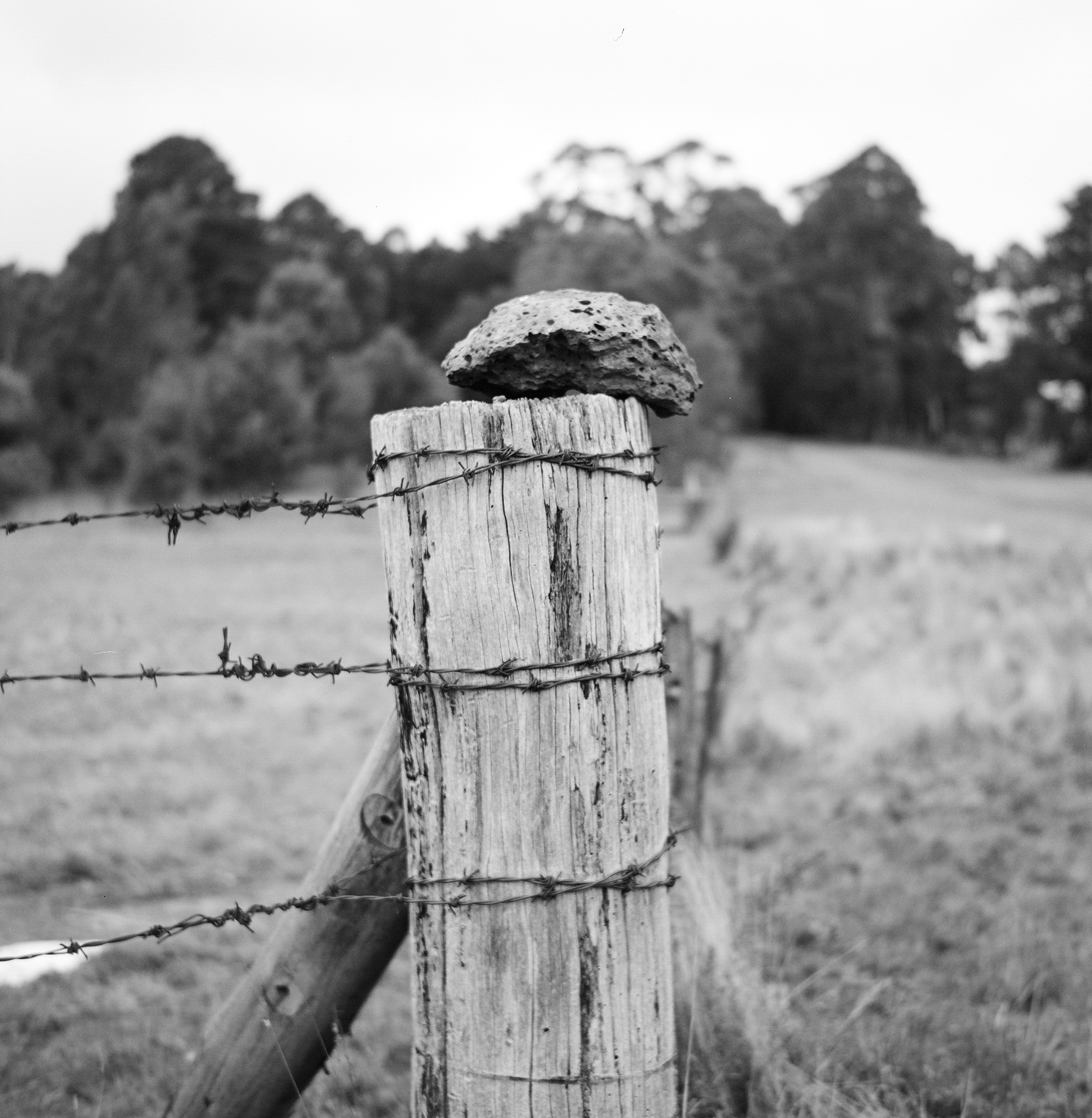 fences barbed wire
