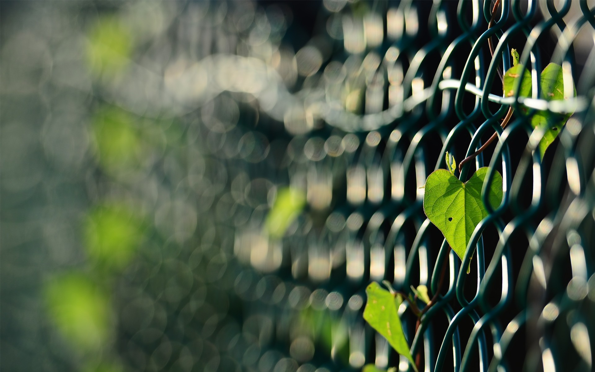 fences leaves macro depth HD Wallpaper